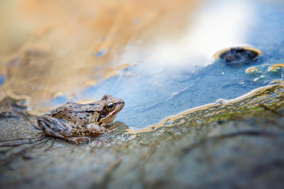 Little frog...
