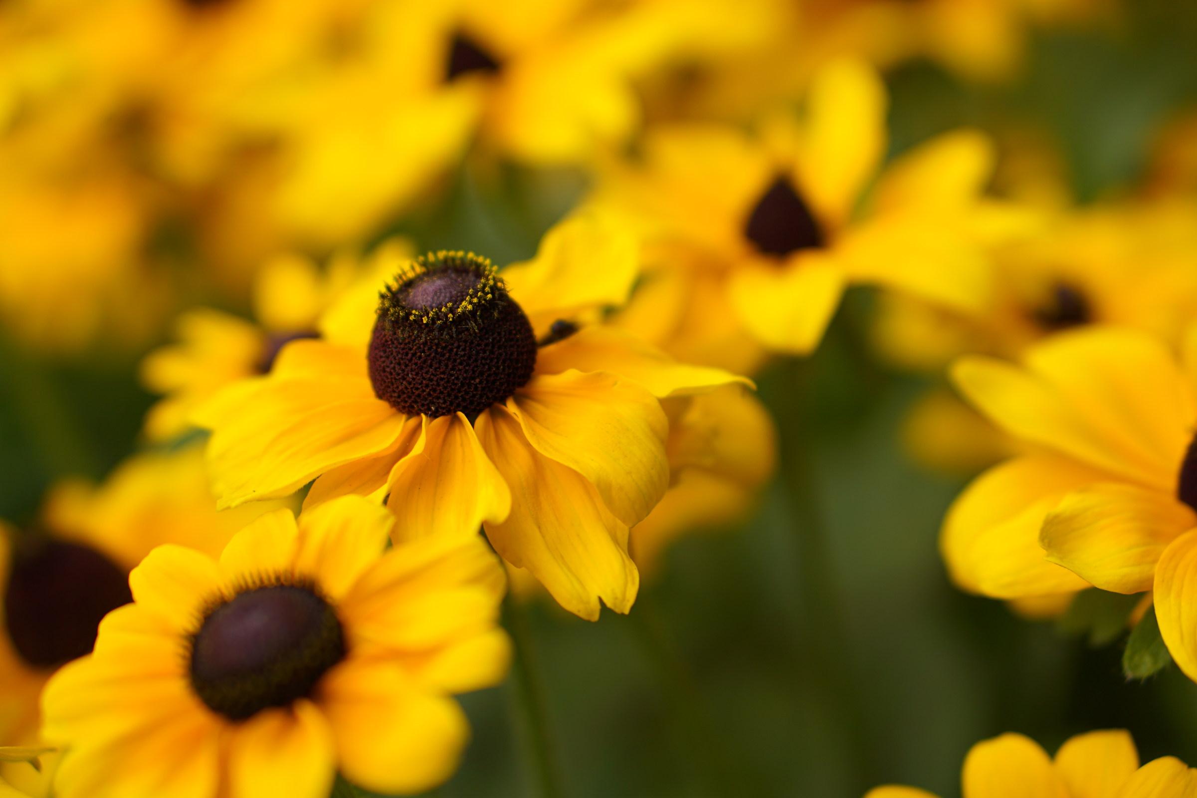 Yellowish...