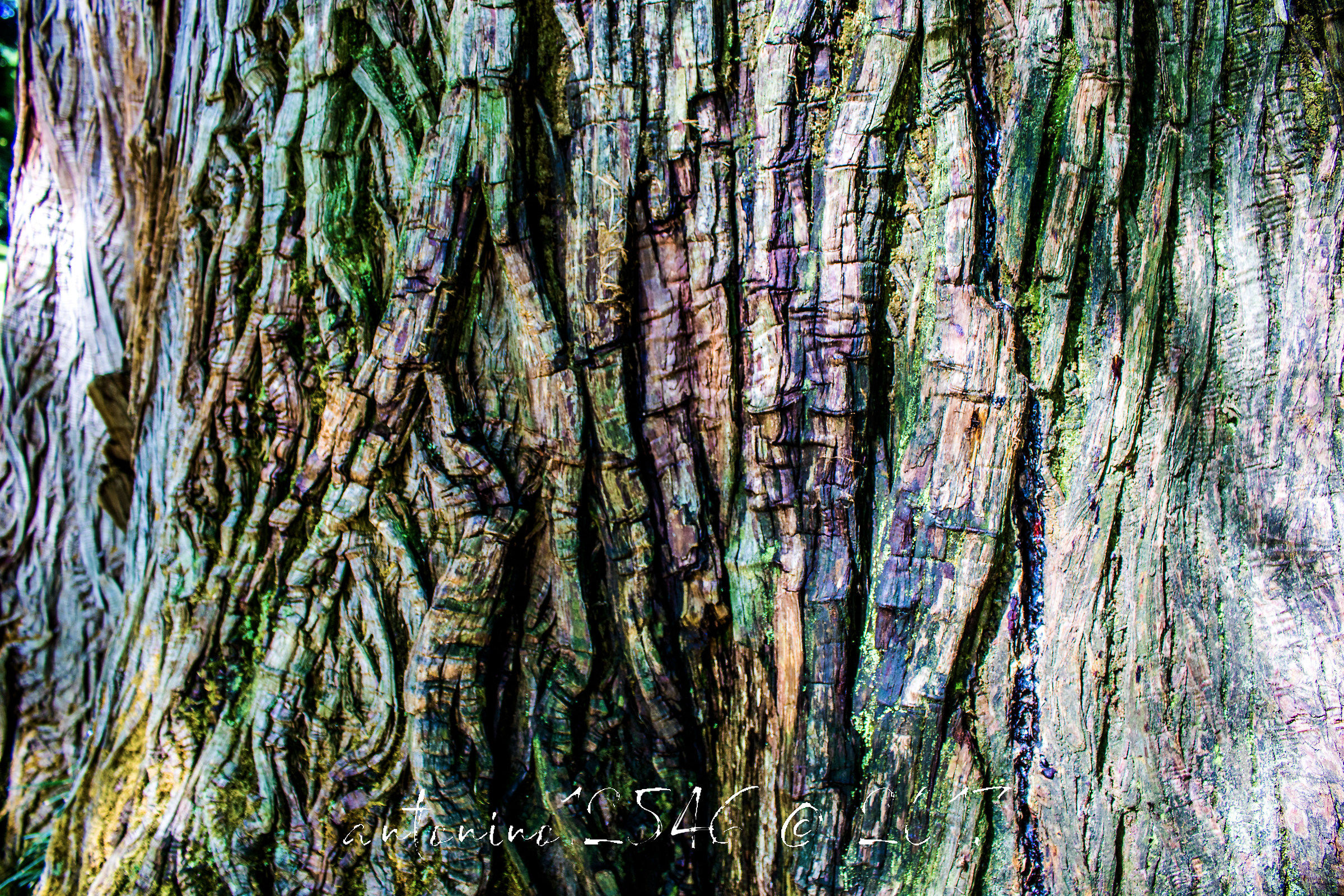 The bark colors...