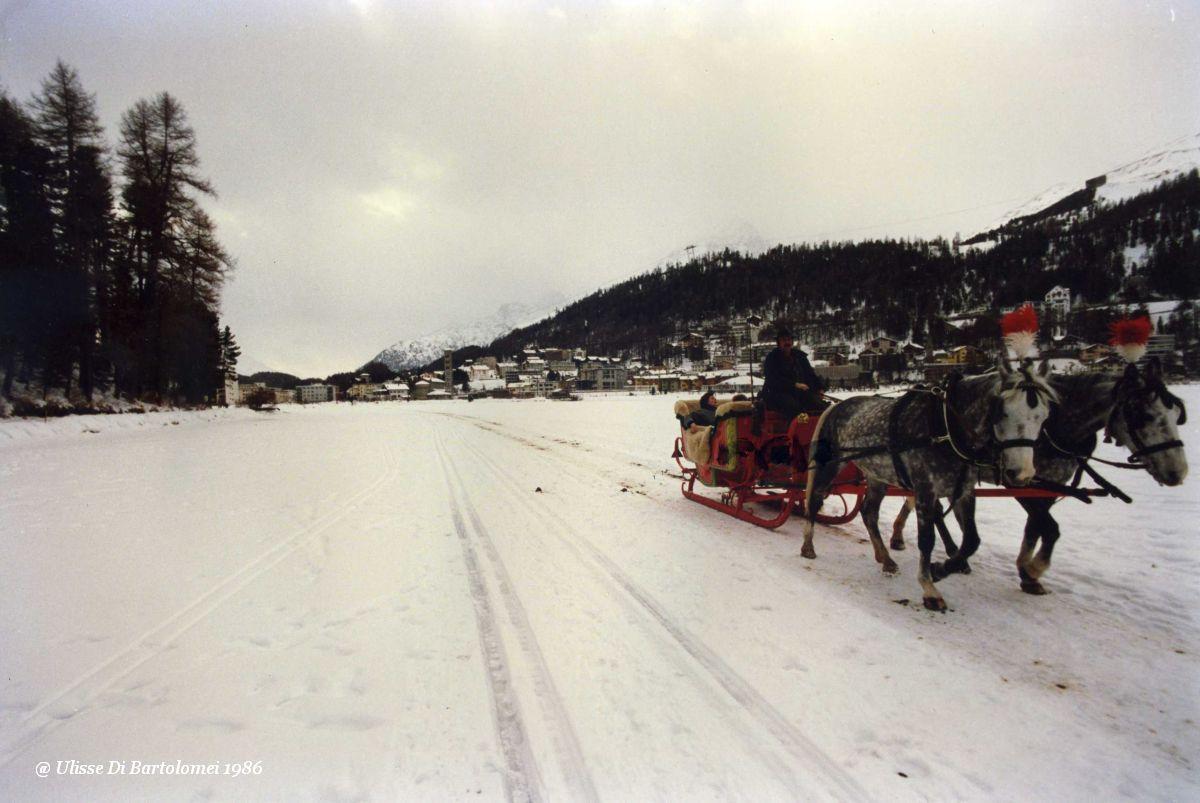 Tourists on sled...