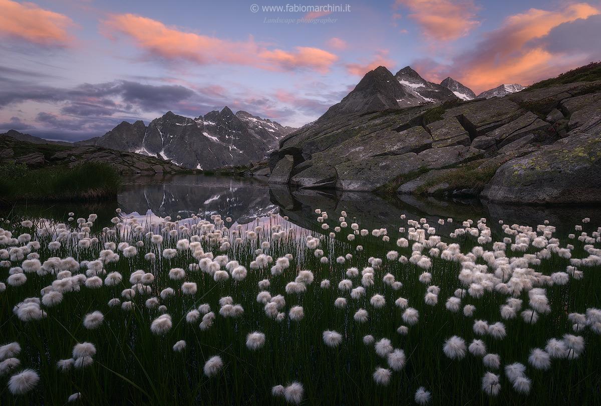 Wild beauty...