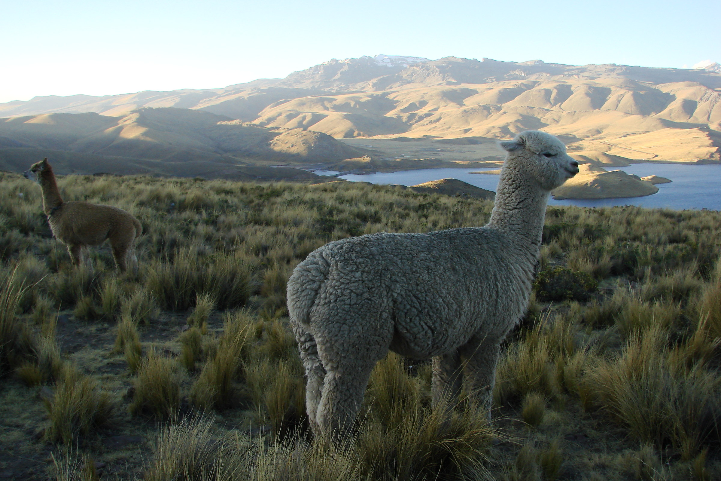 Peru. Altiplano...