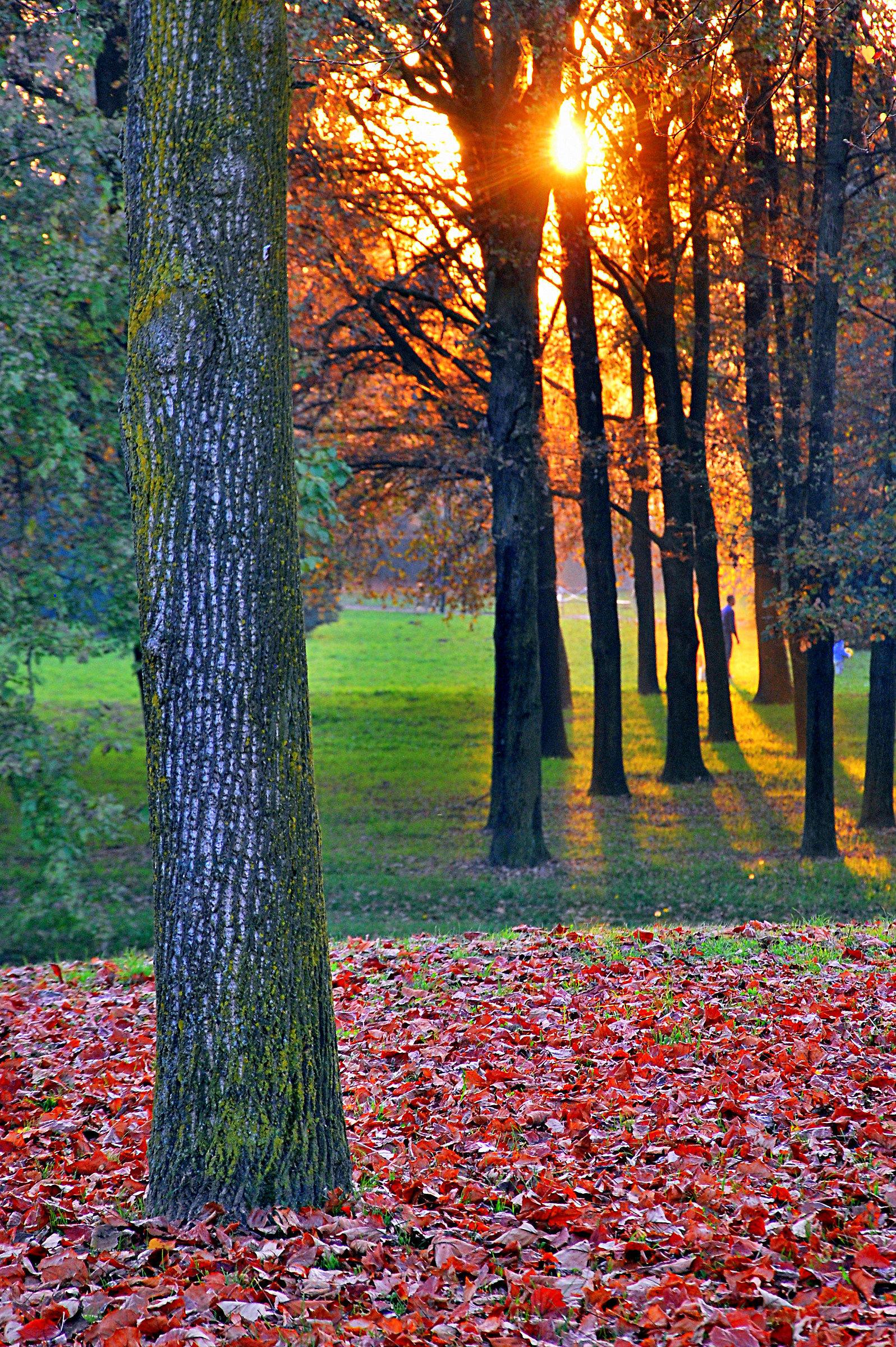 Autumn sunset at Pellerina Park...