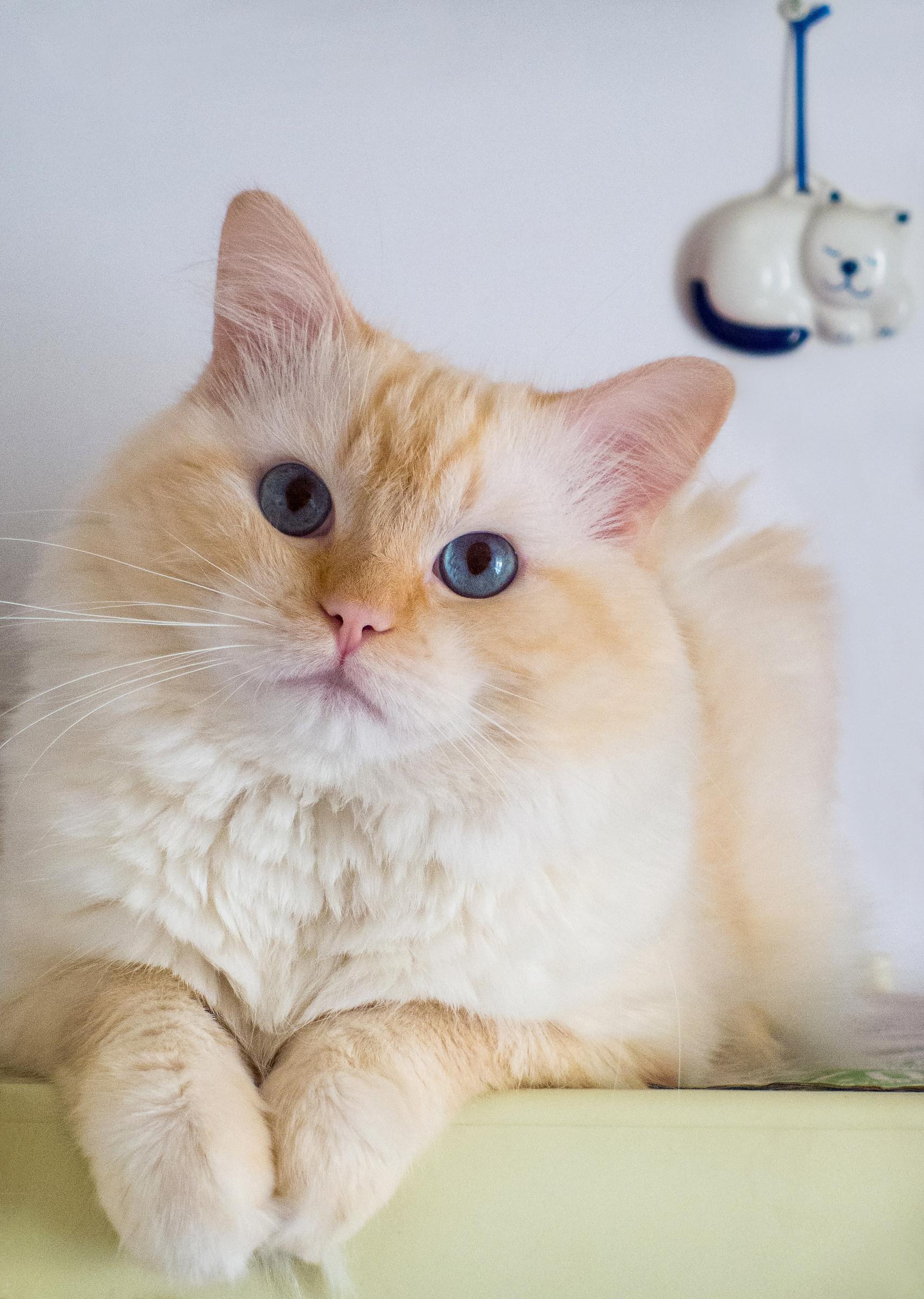 Square cat...