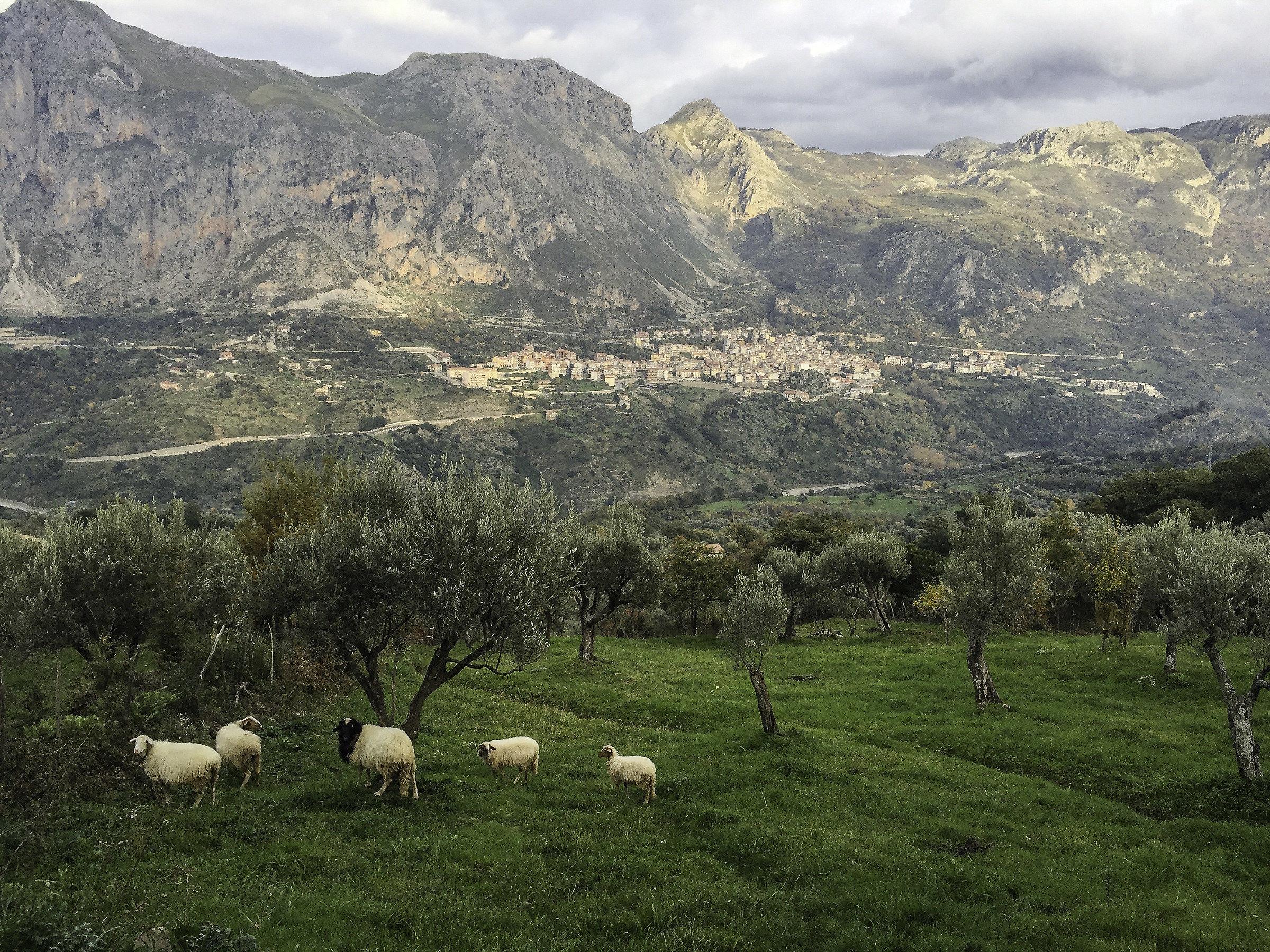 Monti Nebrodi - Sicilia...