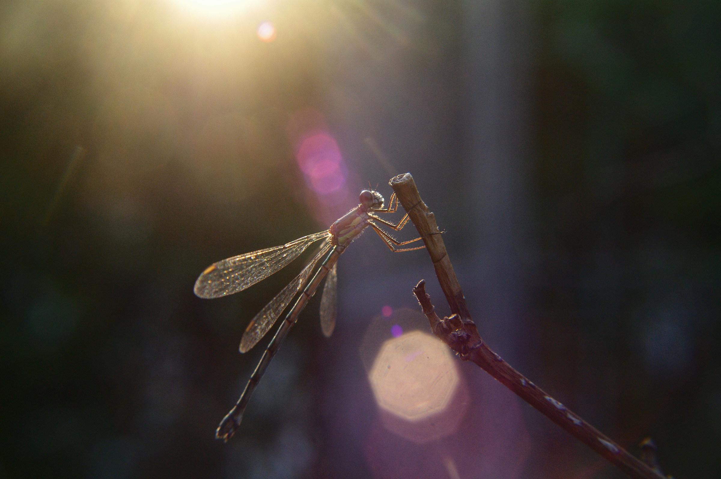 Dragonfly001...
