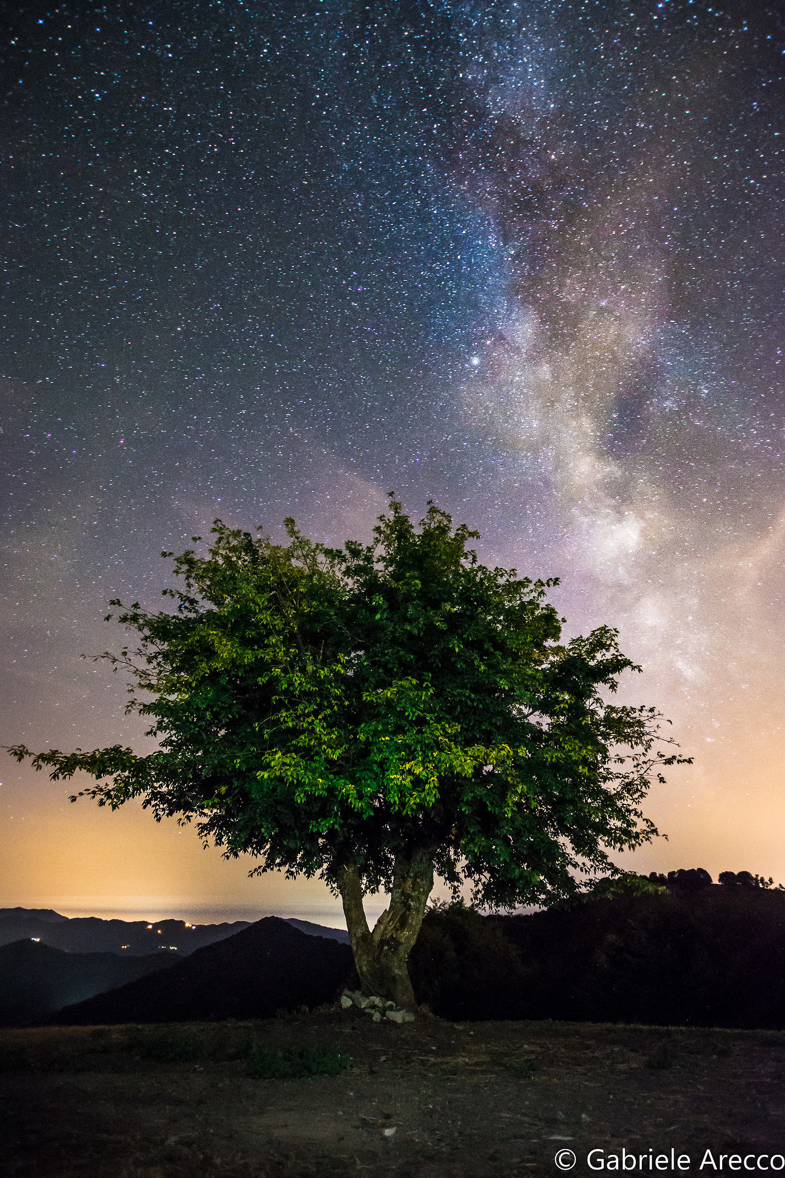 Lonely tree on a starry night...