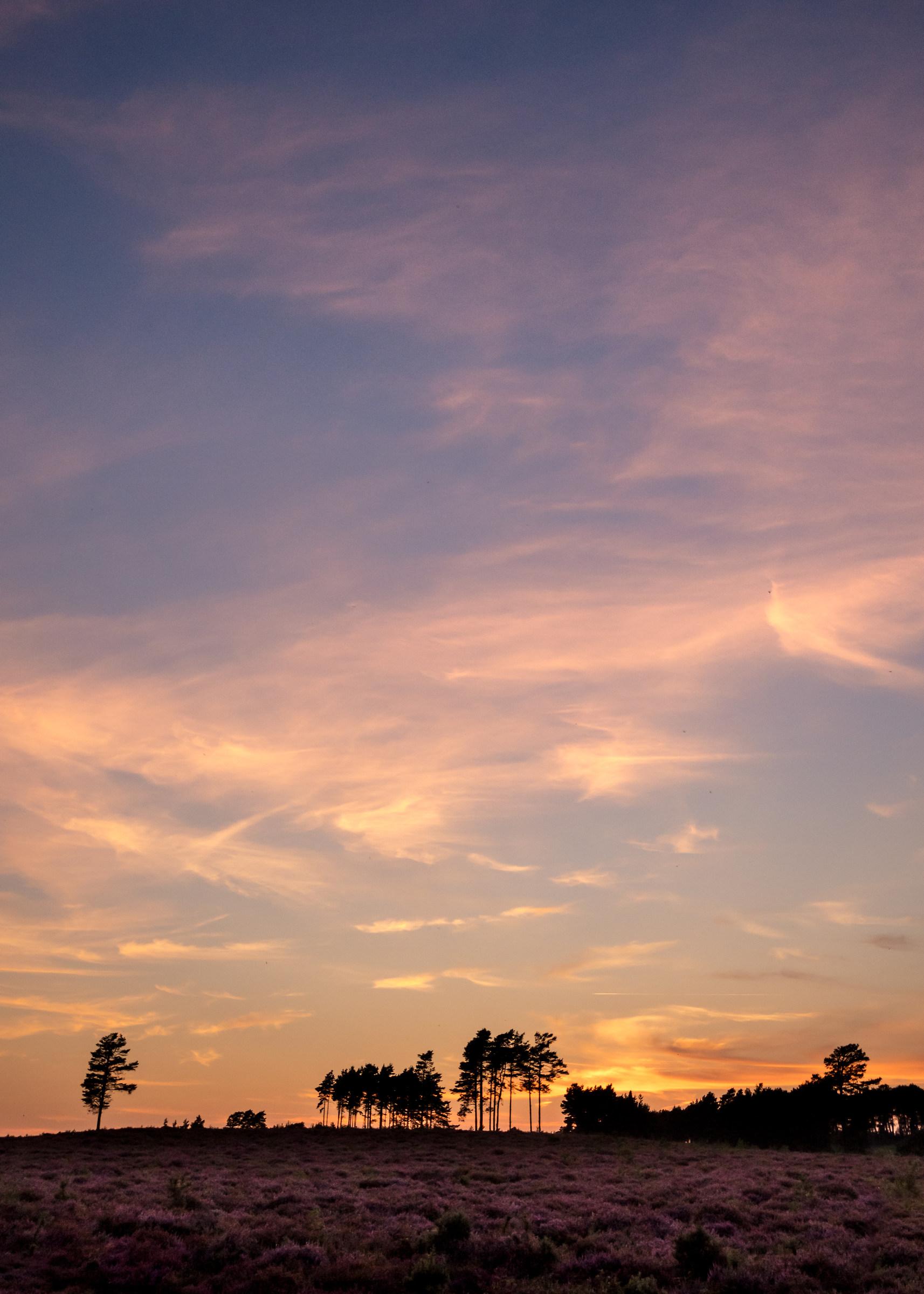Sunset Sky Above The Purple Carpet...