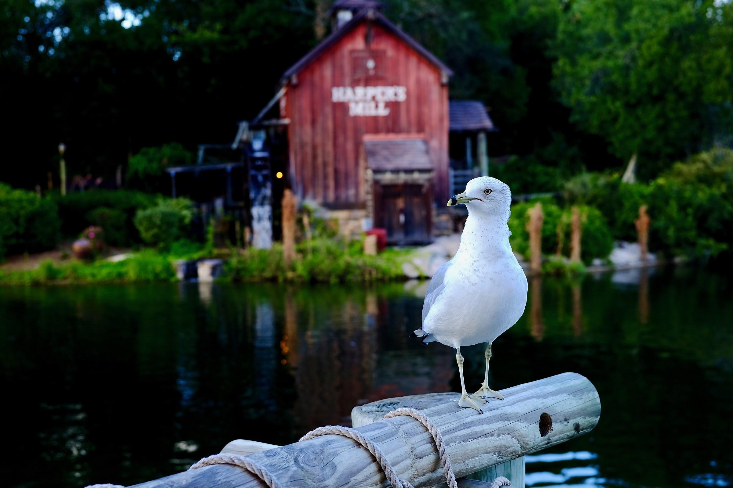 Il mondo di walt disney juzaphoto for Mondo selvaggio di cabine disney