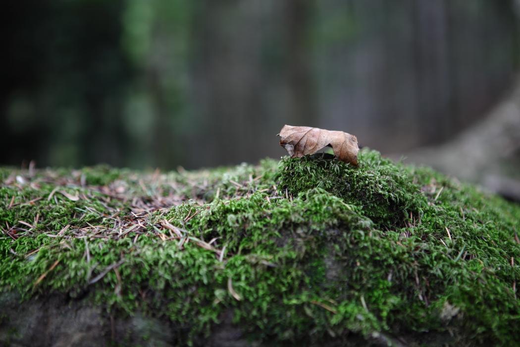 Foglia nel bosco...
