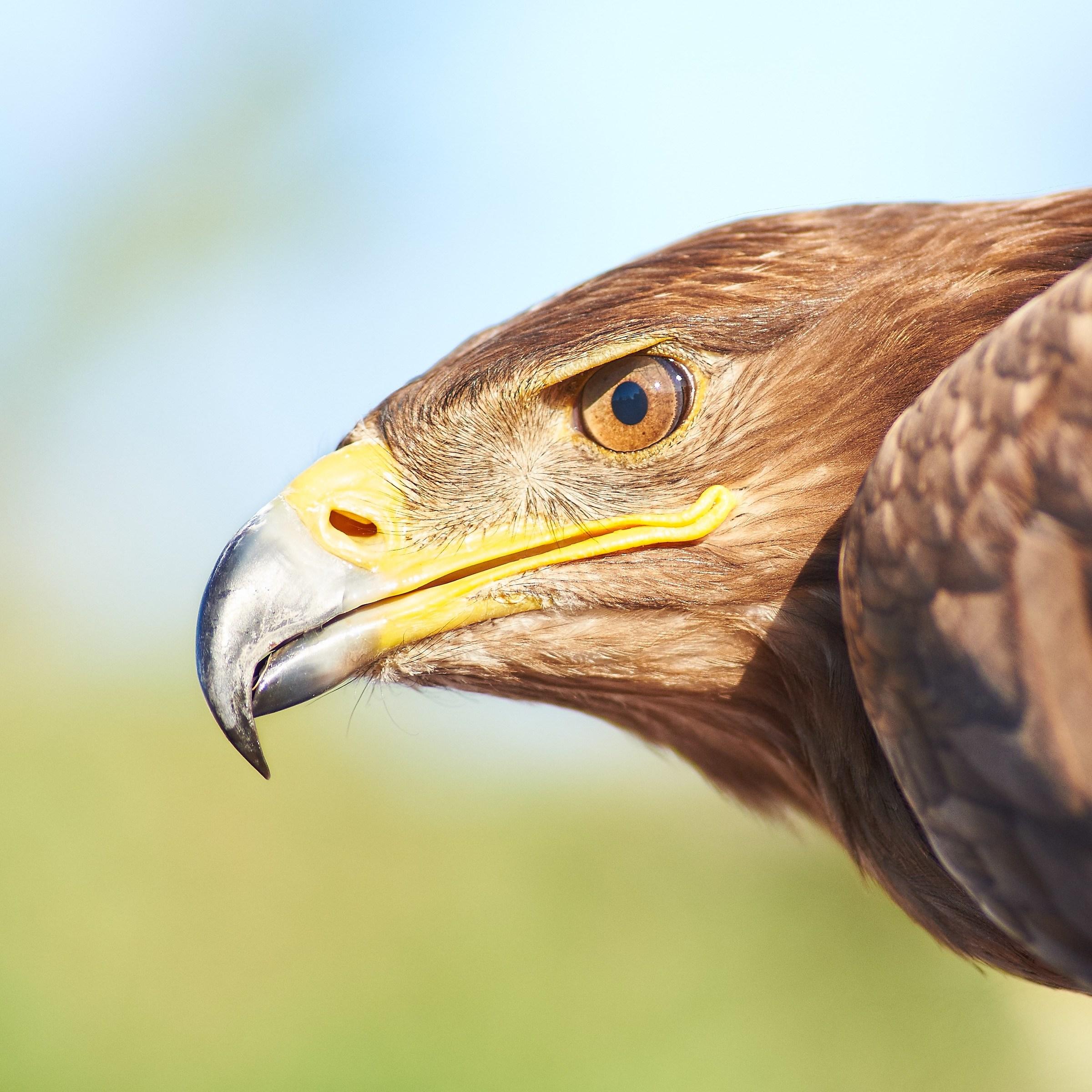 The eagle eye...