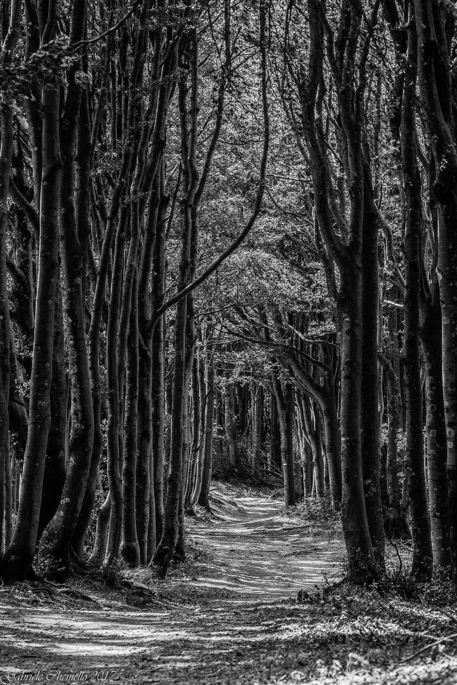 La strada nel bosco...