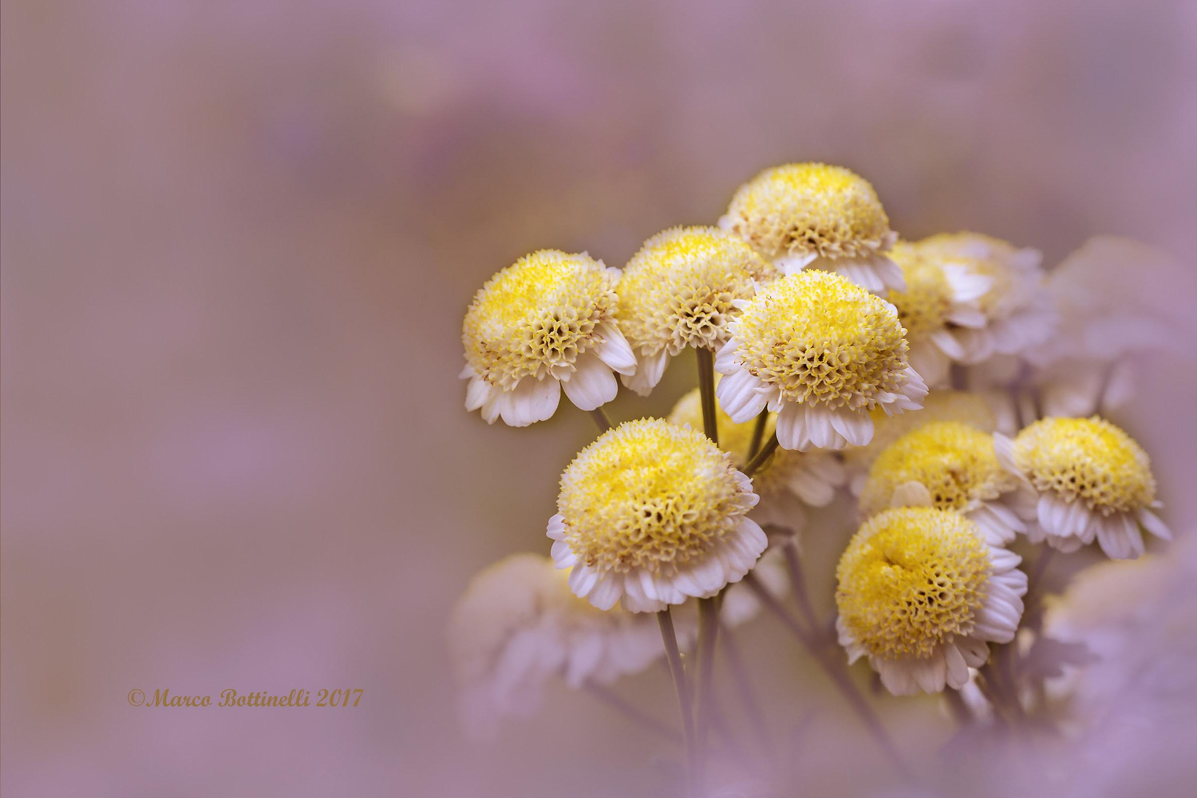 Floral Bouquet...