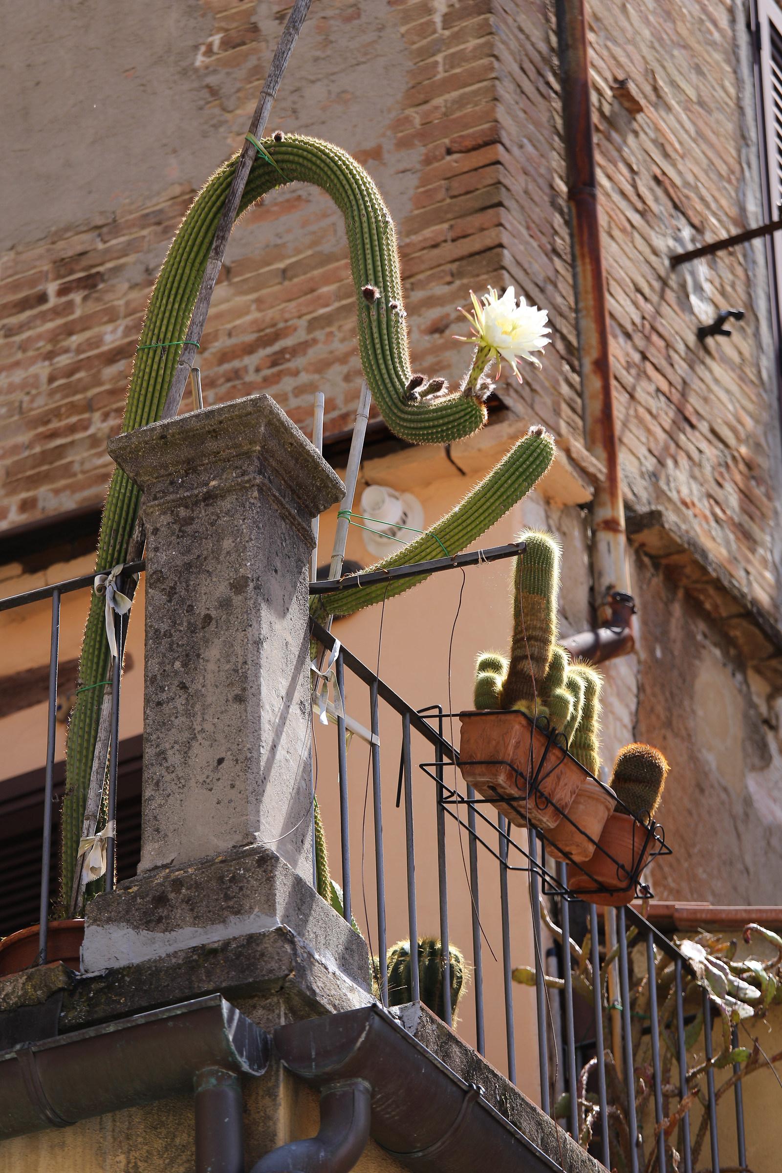 photo of the cactus...