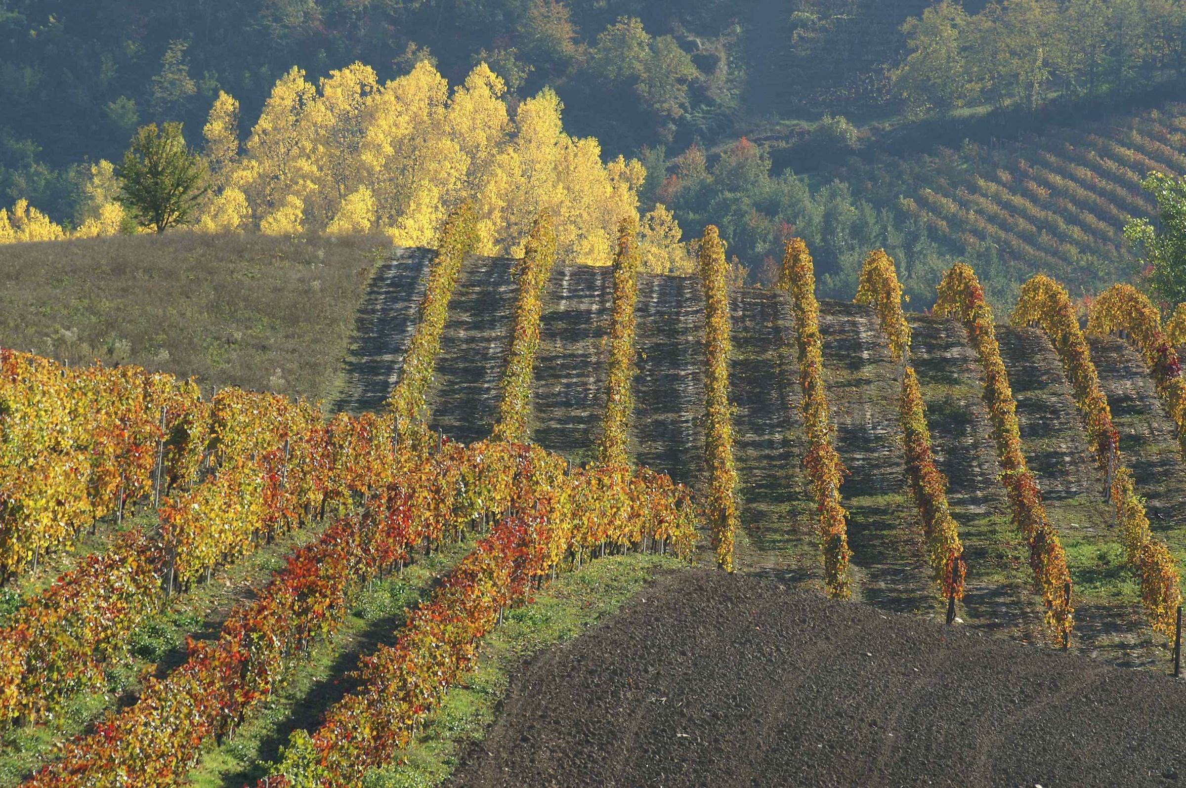 vigne colorate...