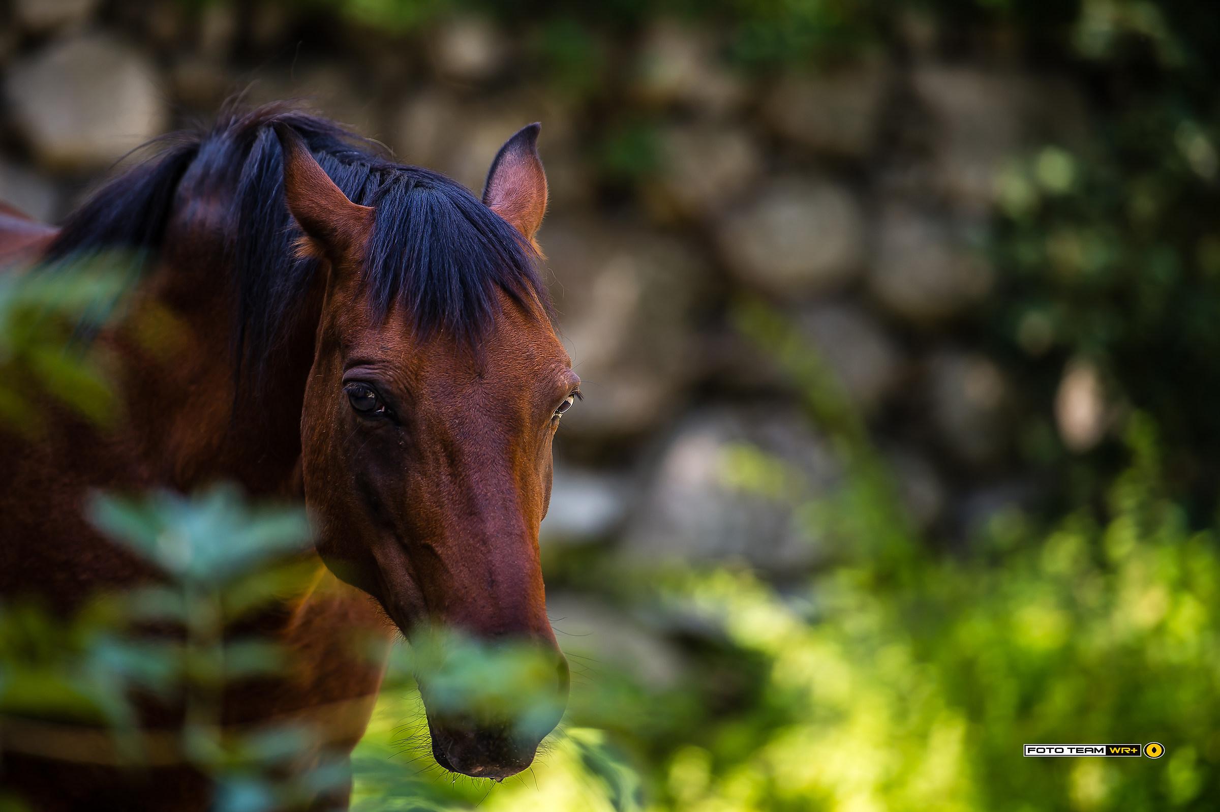 Il cavallo del laghetto di varna juzaphoto for Animali laghetto