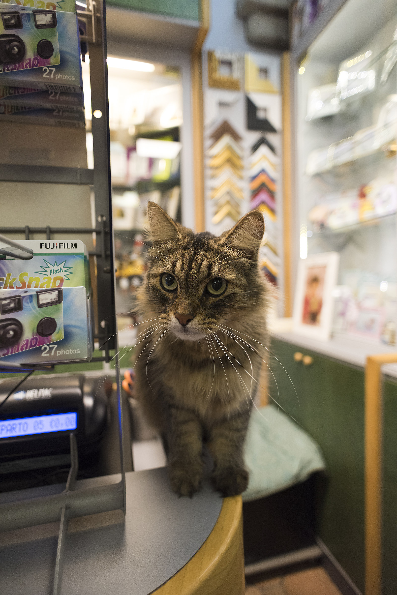 Cat in the shop...