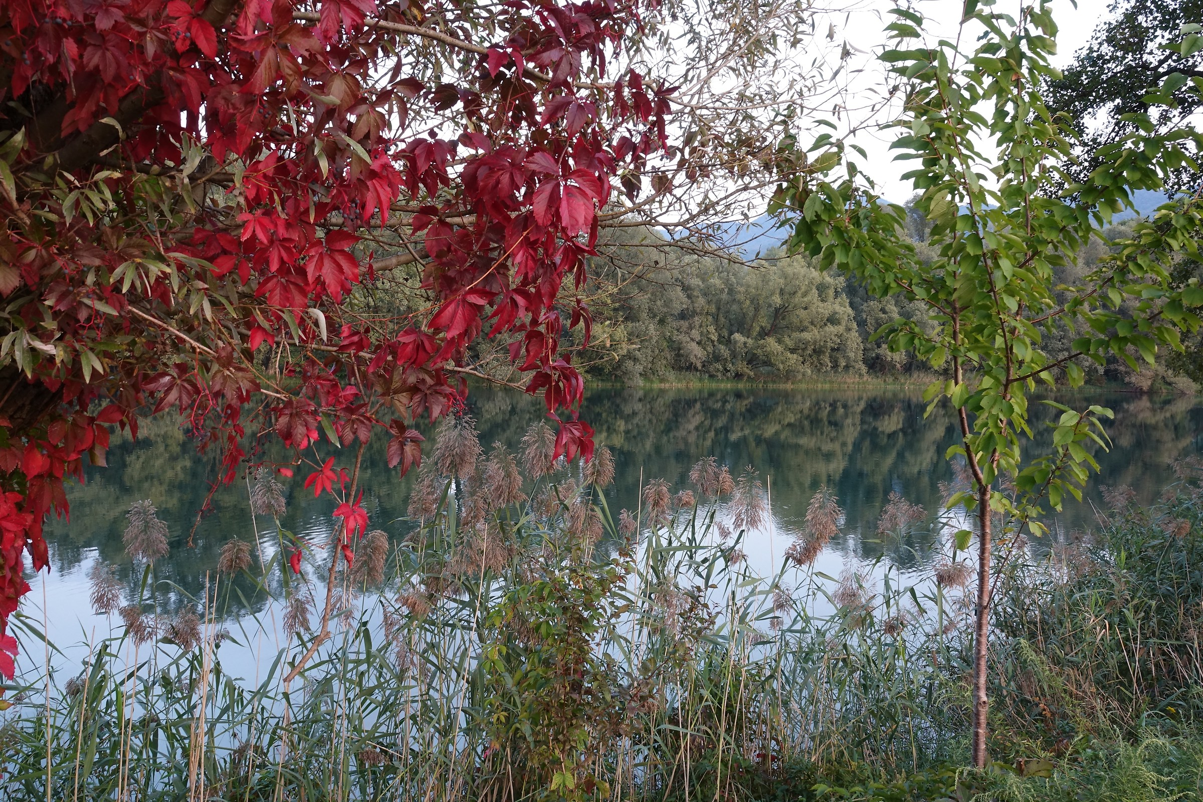 Adda, early autumn colors...