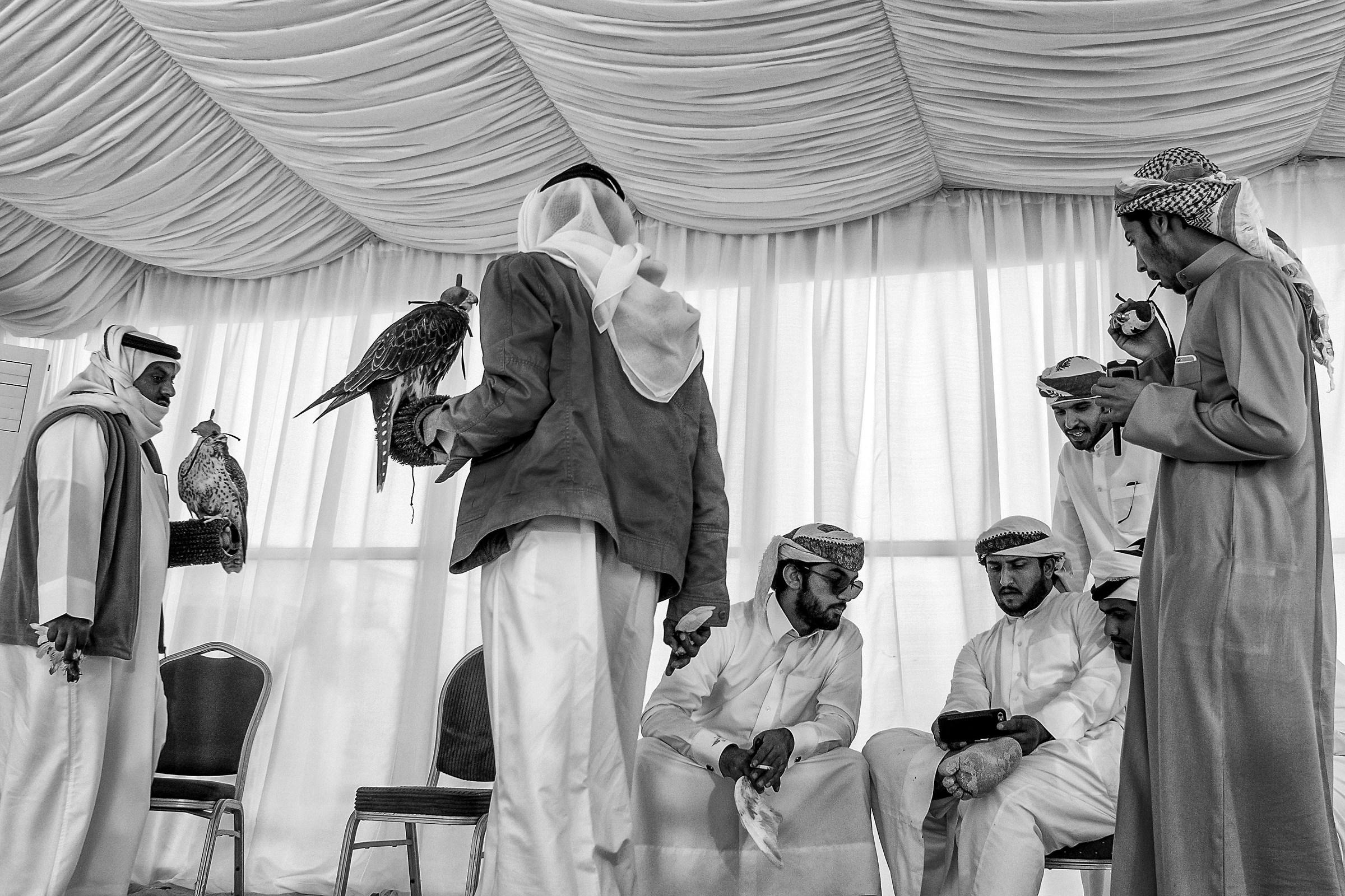 Racing Falcons in Bahrain...