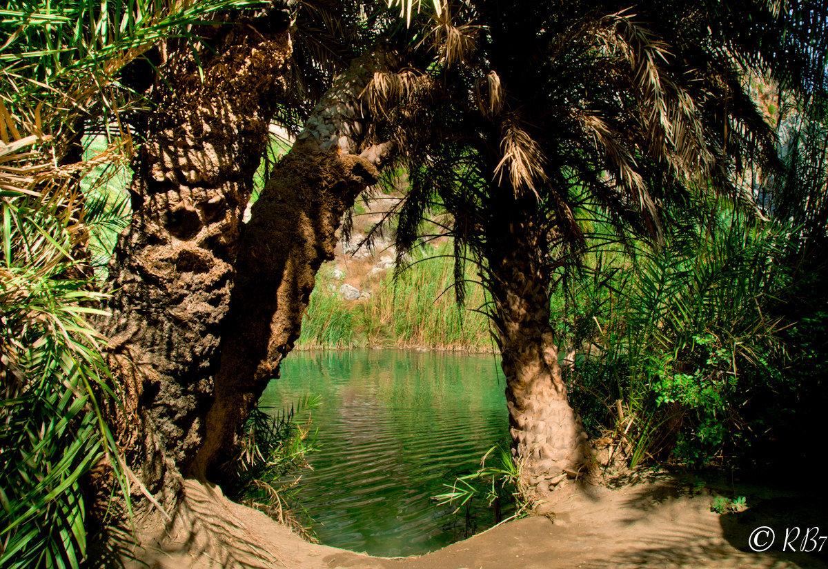 Crete Palme Forest...