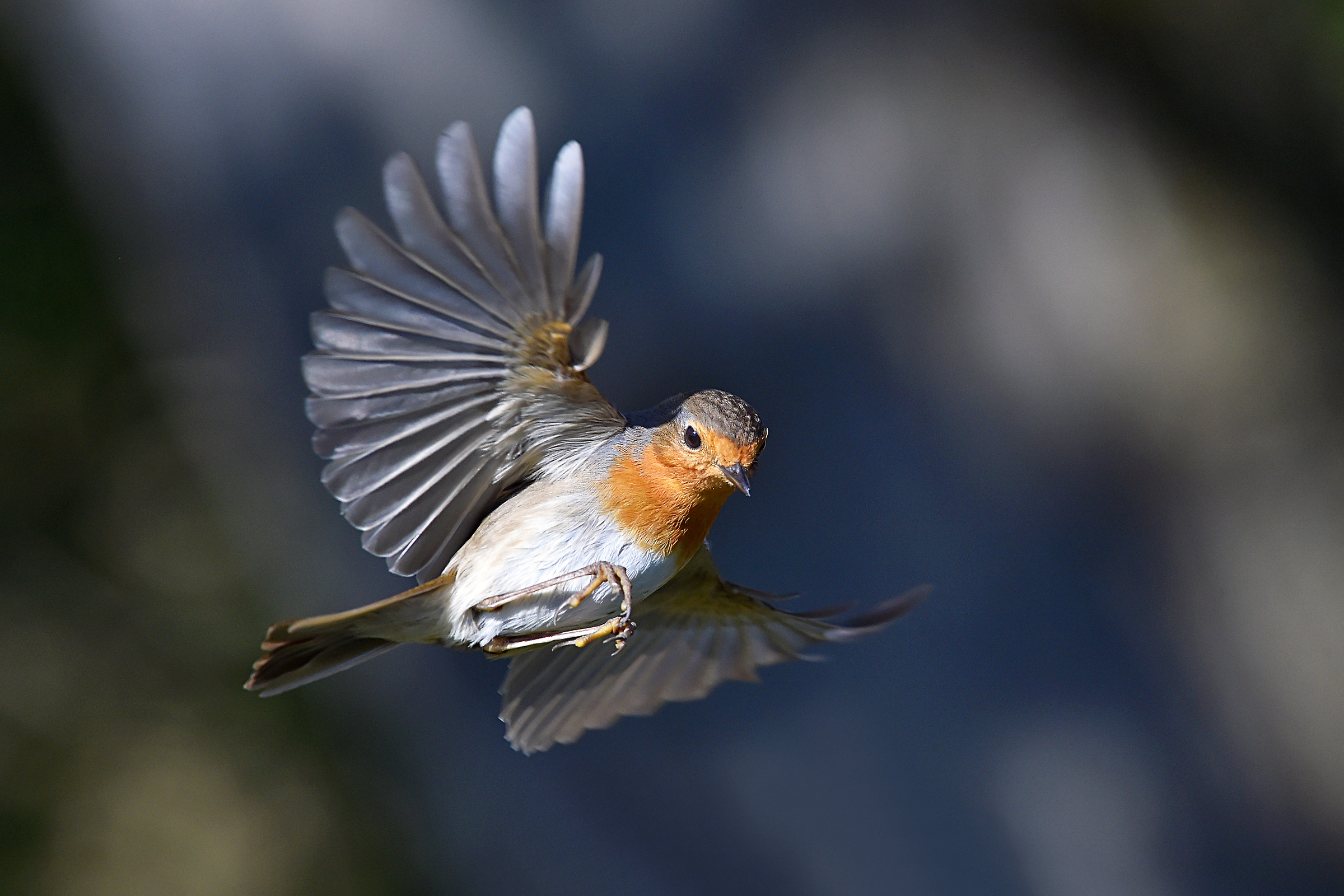 Feather Stories (Robin)...