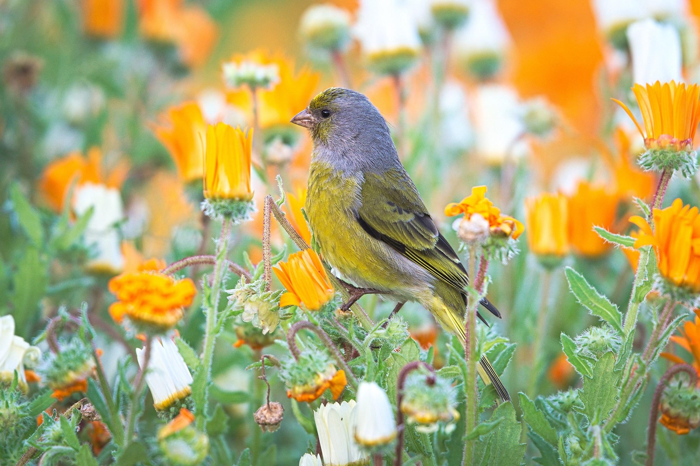Al Parco Company's Garden (Città del Capo)...