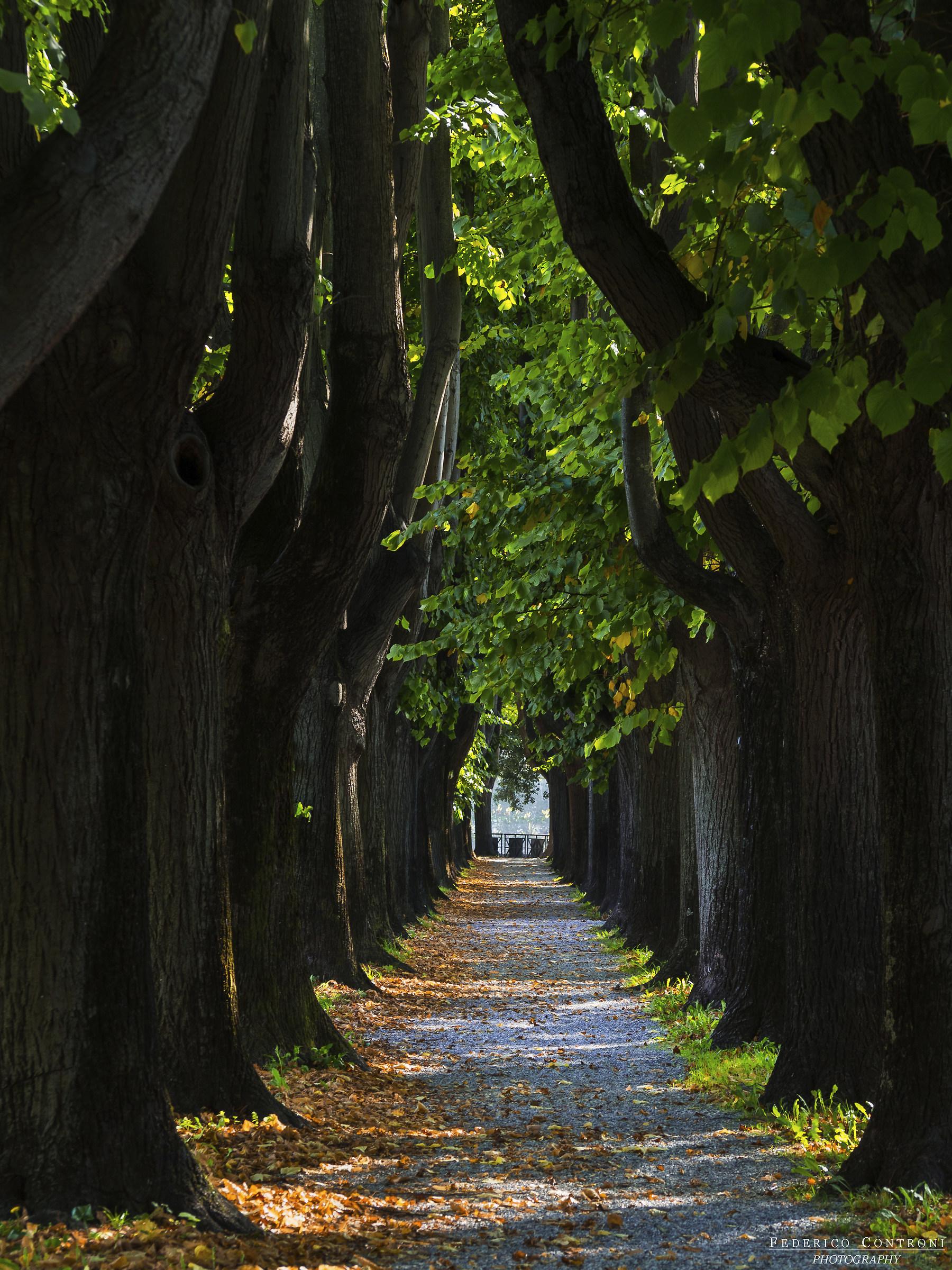 Tunnel d'inizio autunno...