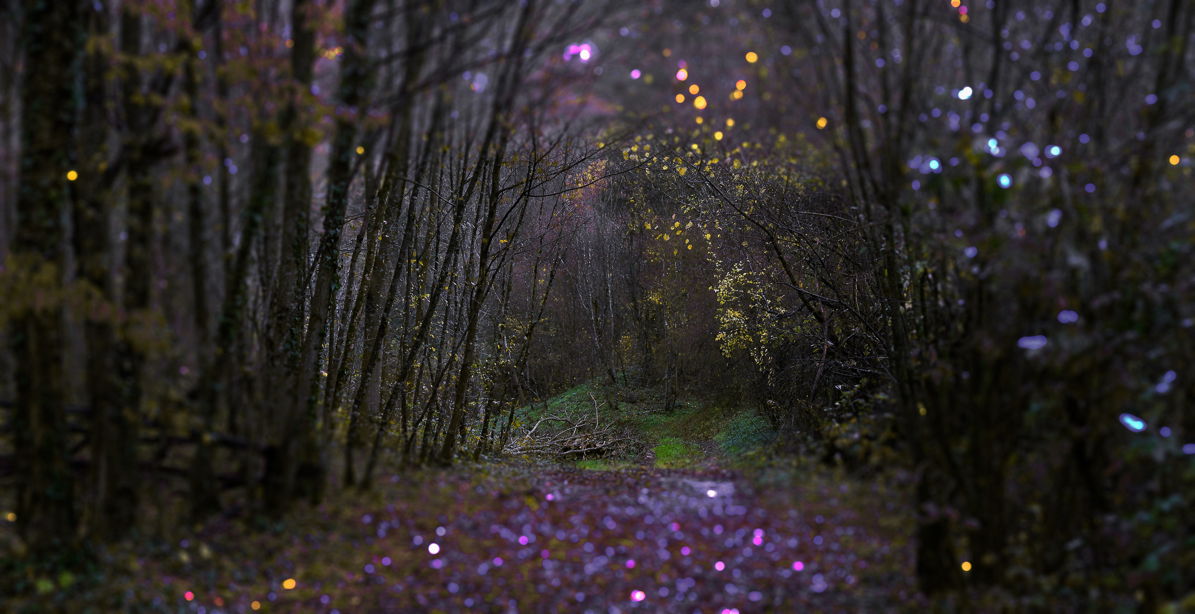 The forest in evening dress...