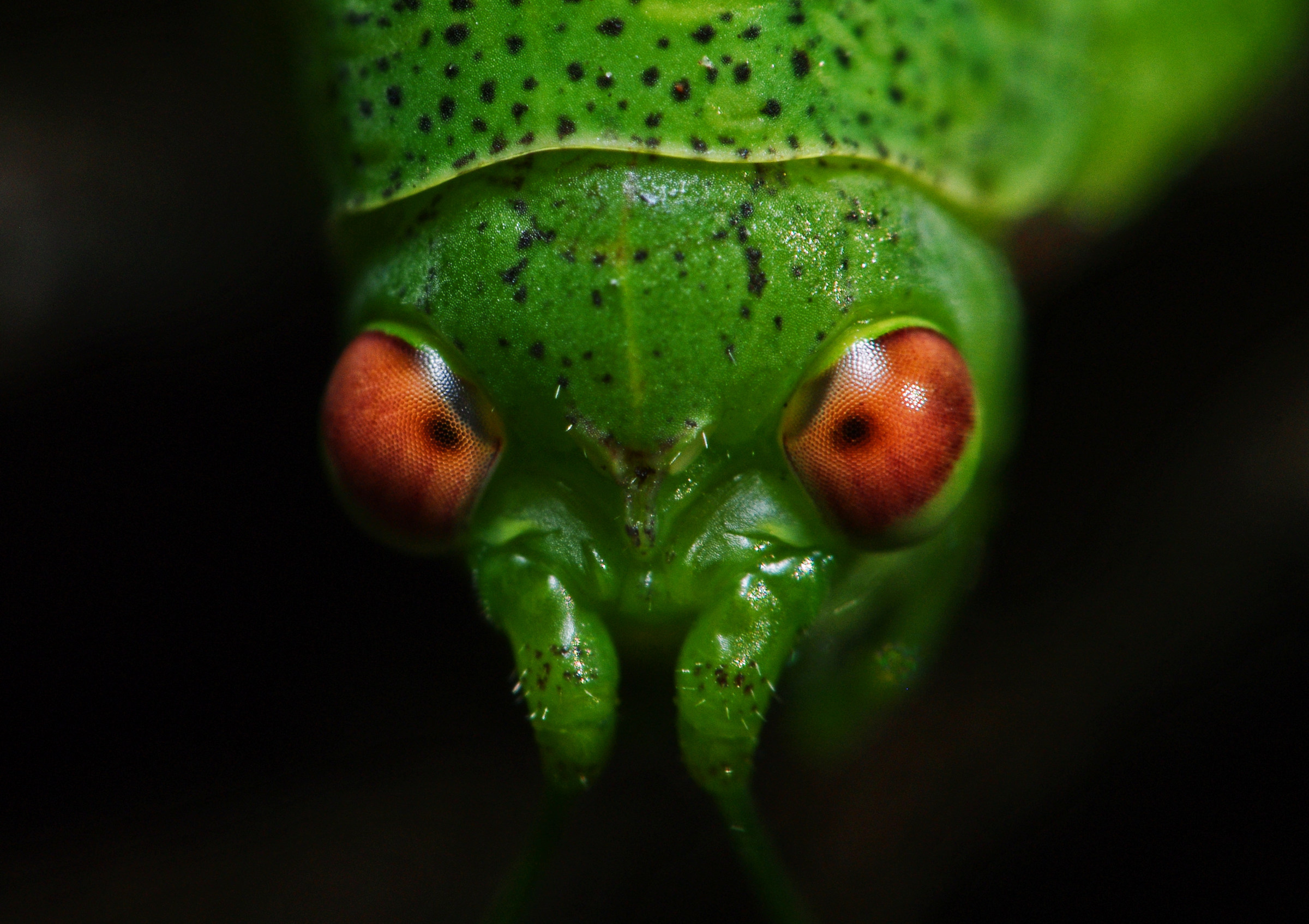 Have you ever looked in the eyes of a grasshopper?...