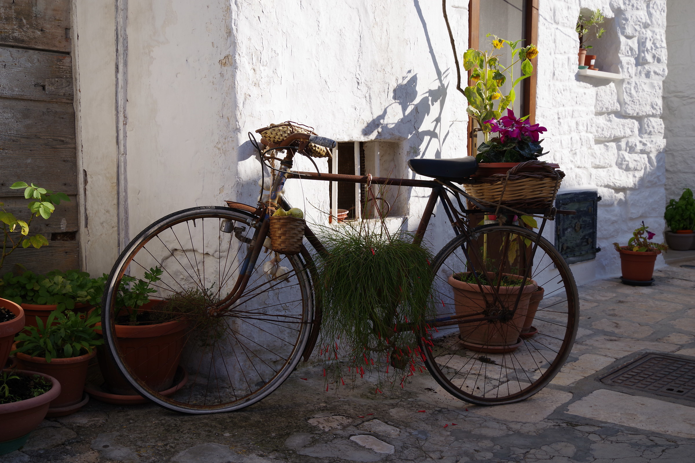 The Floral Bike...