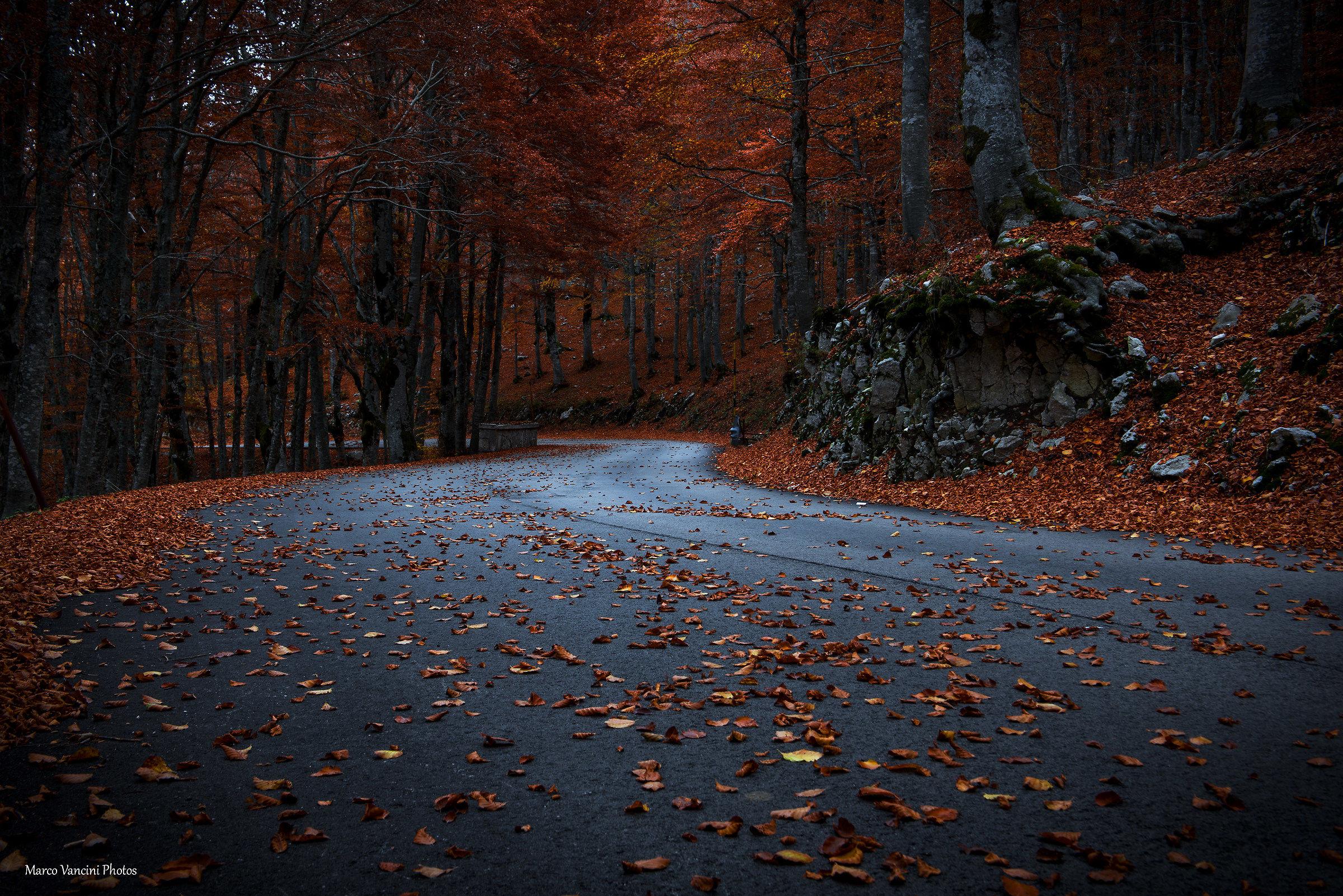 autumn charm...