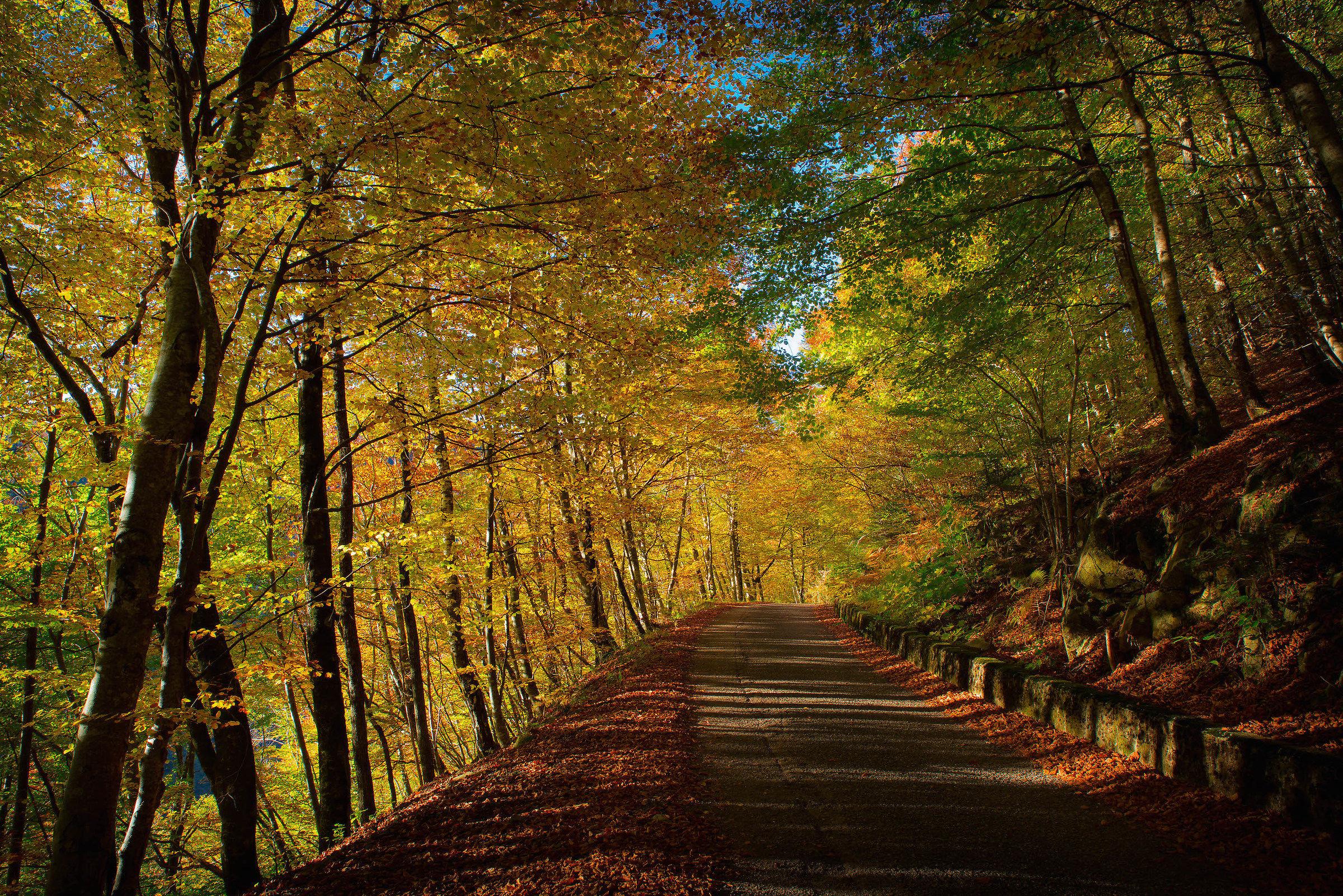 I colori del bosco...