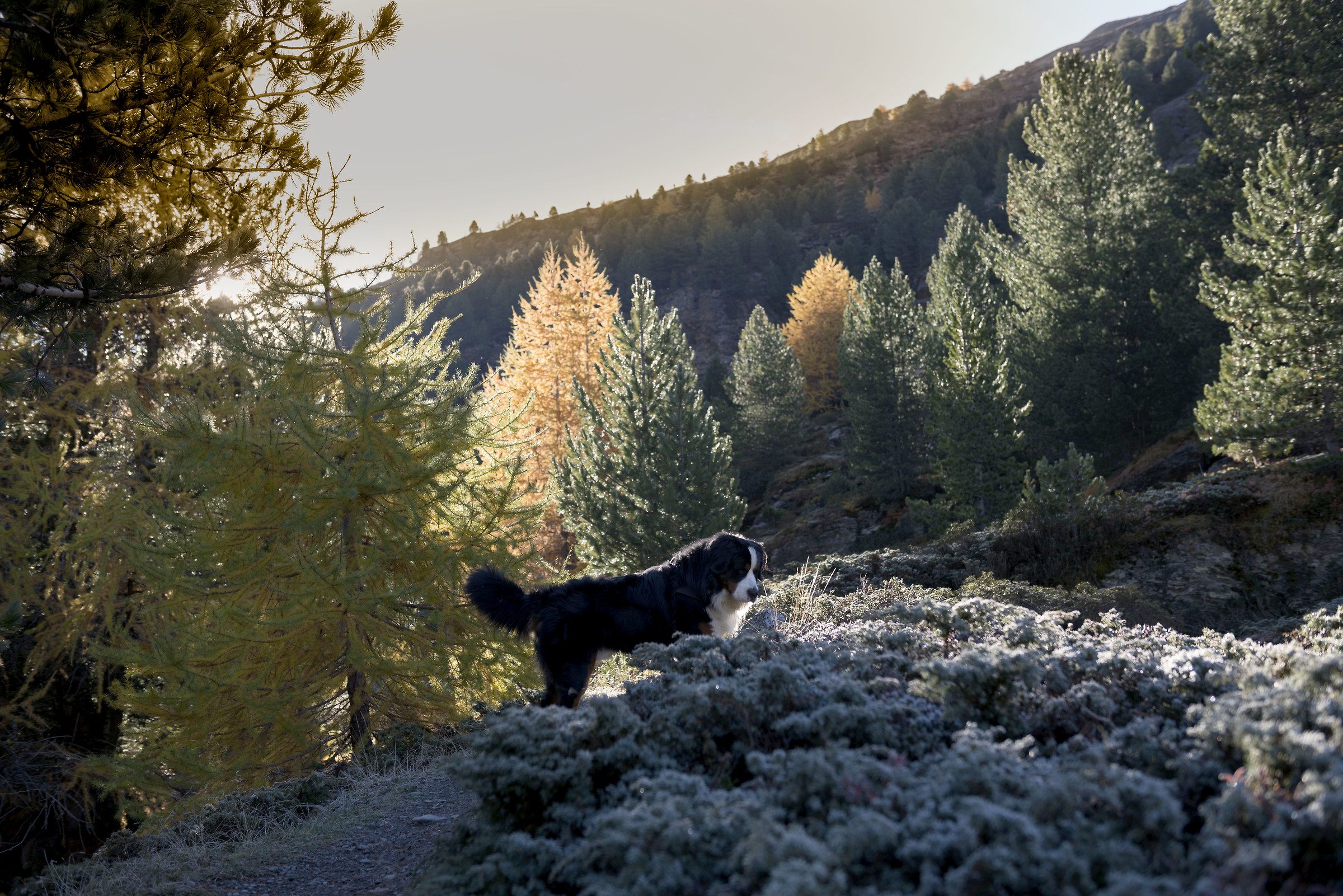 Autumn with frost and sun...