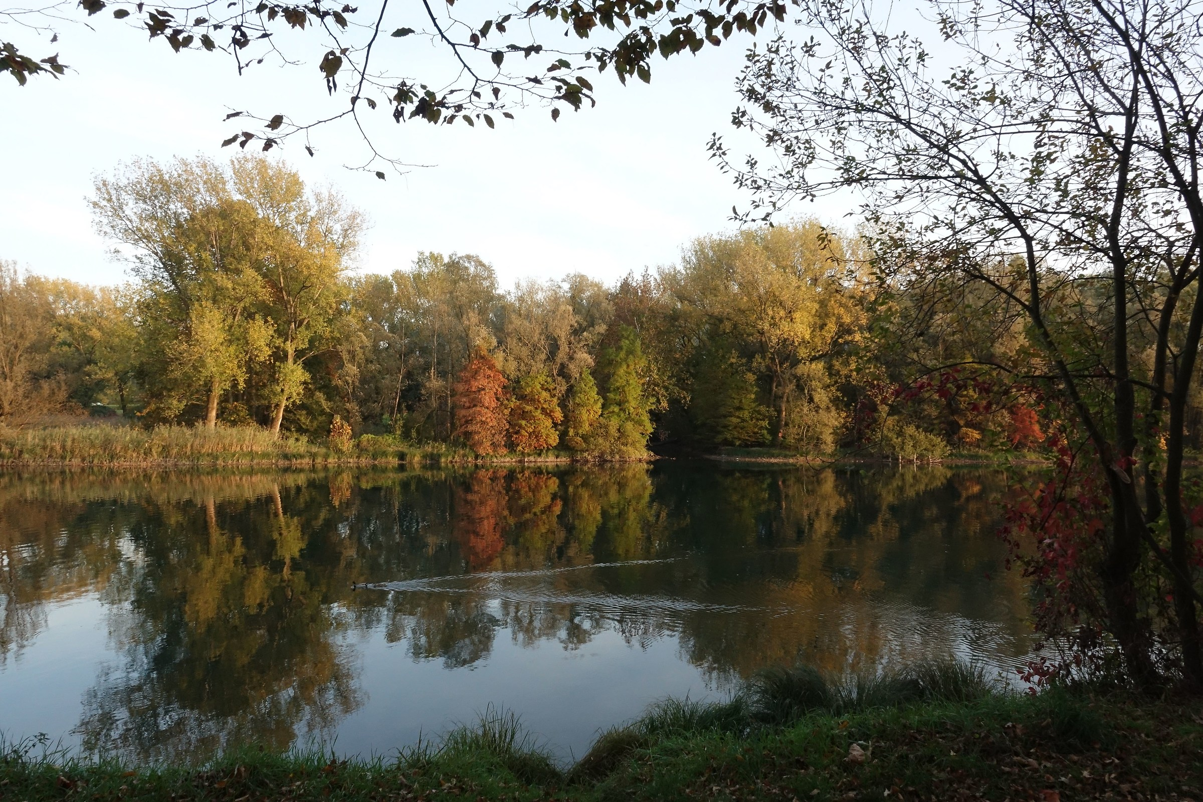 autumn reflections in the Adda...