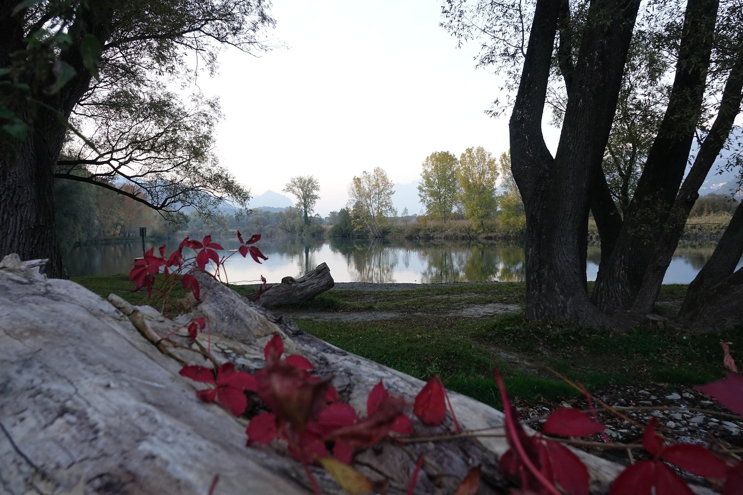 Autumn along the Adda...