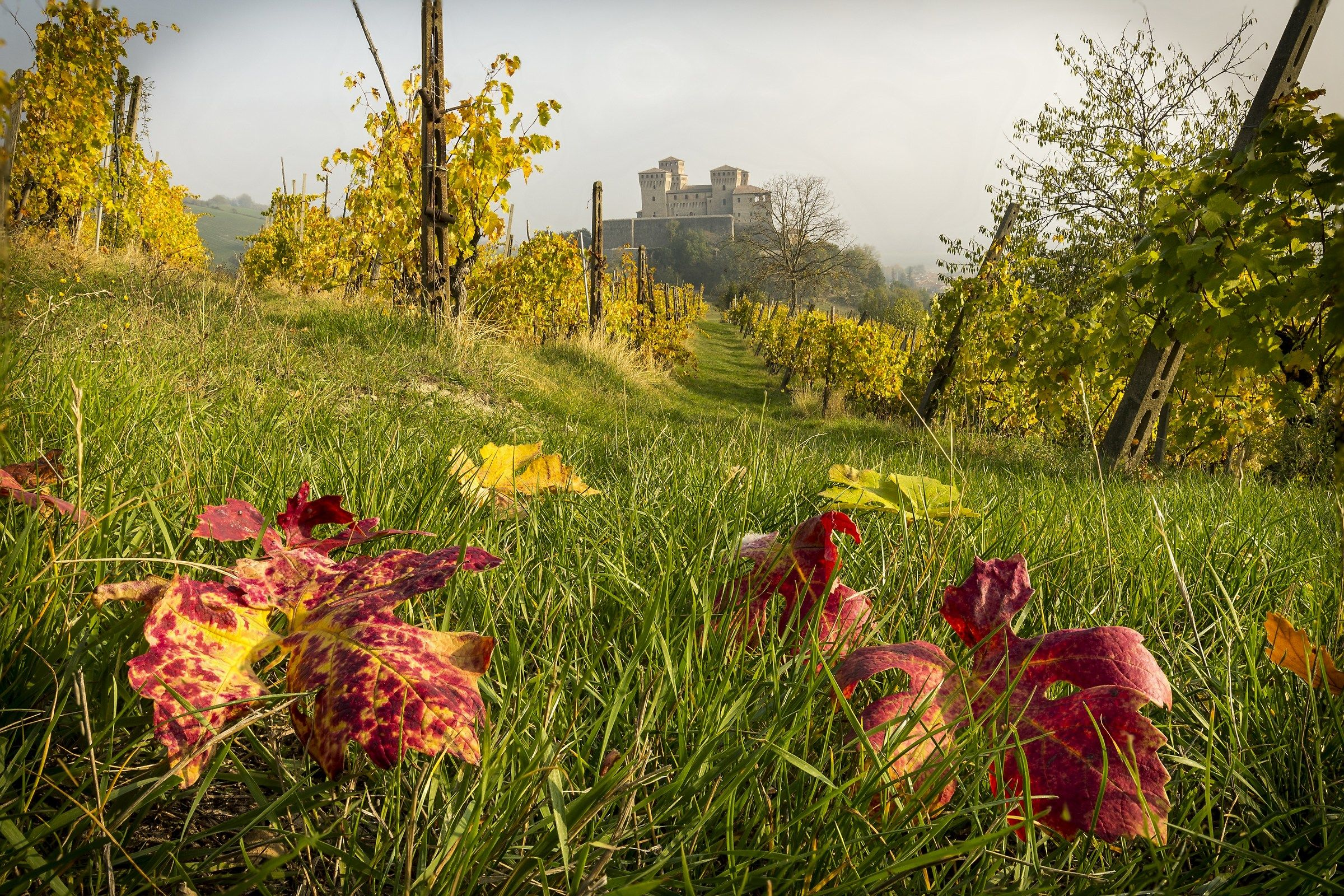 Colors towards Torrechiara...