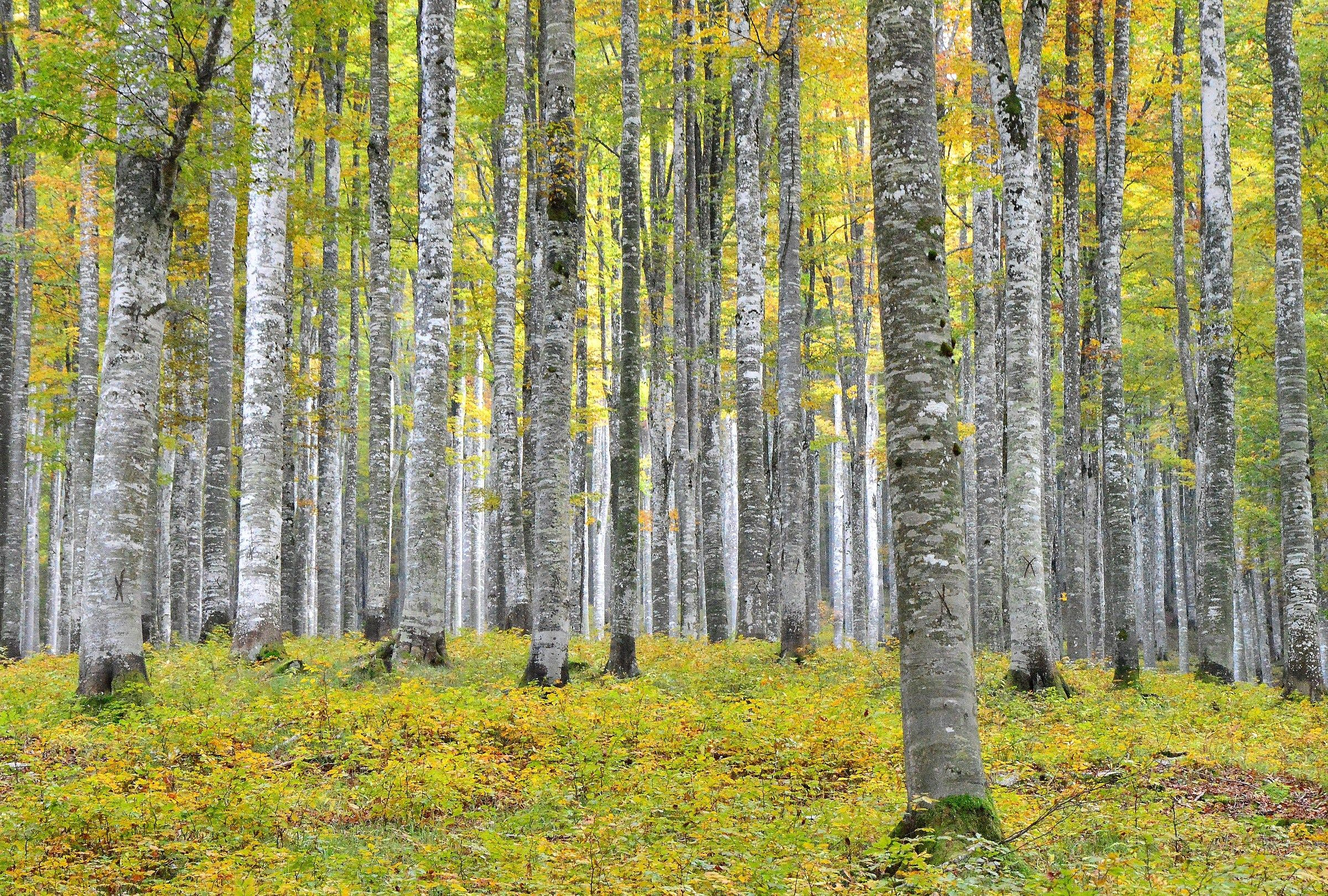 Colored forest...