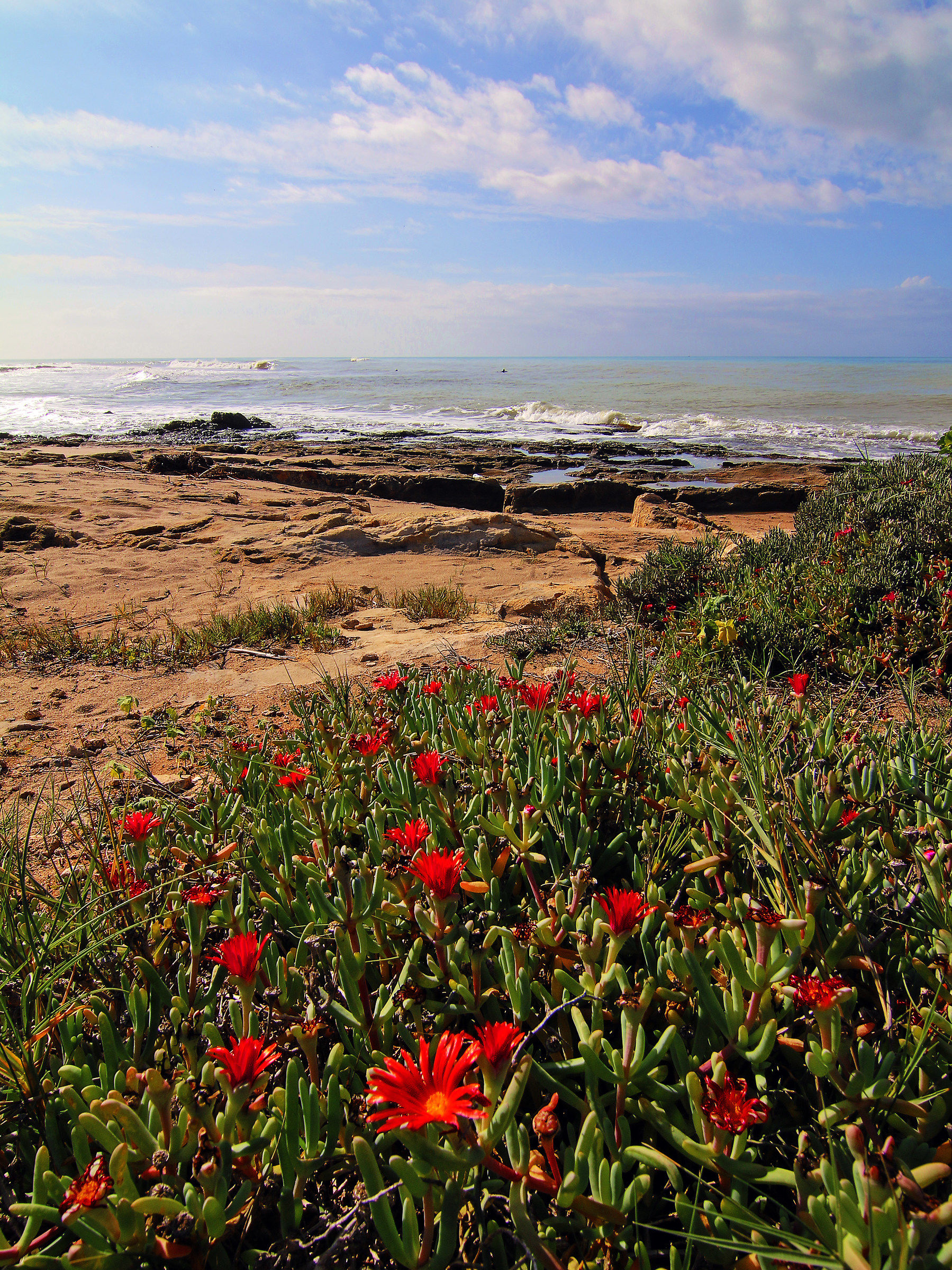 Flowers and sea...