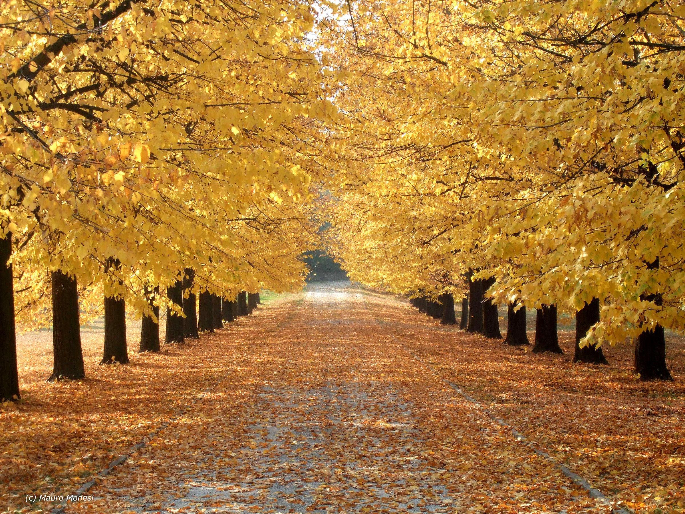 Golden Avenue...