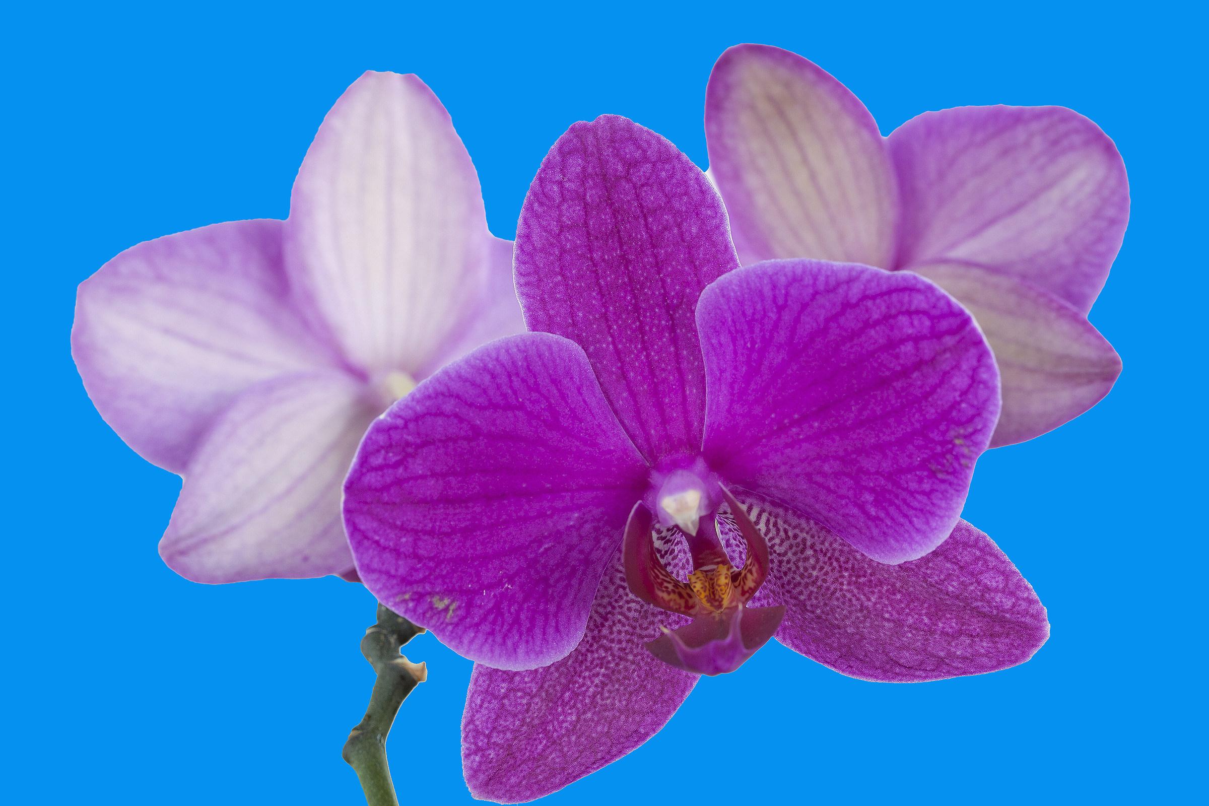 Orchidea 3...