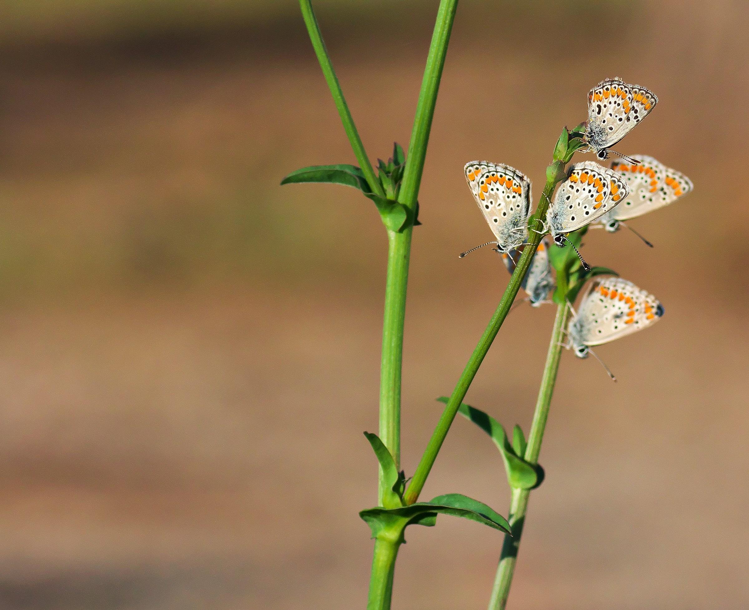 A handful of butterflies...