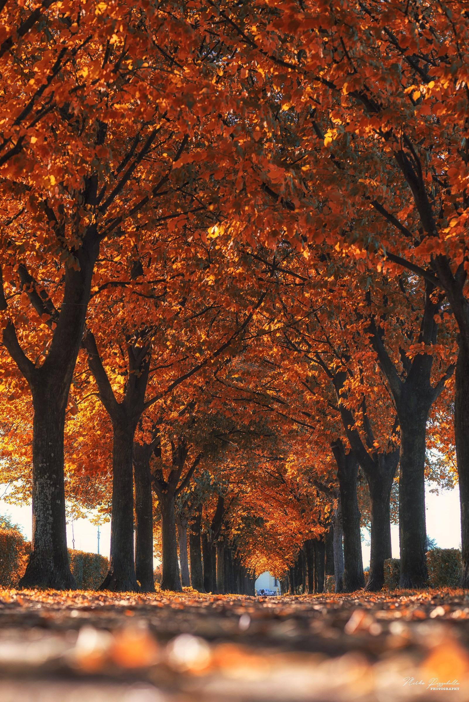 i colori dell'autunno...