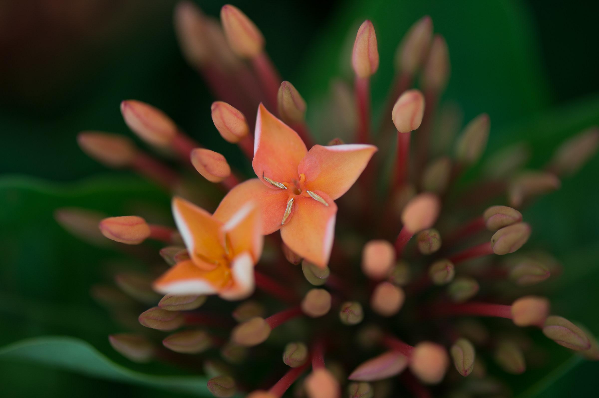 Bouquet arancio...