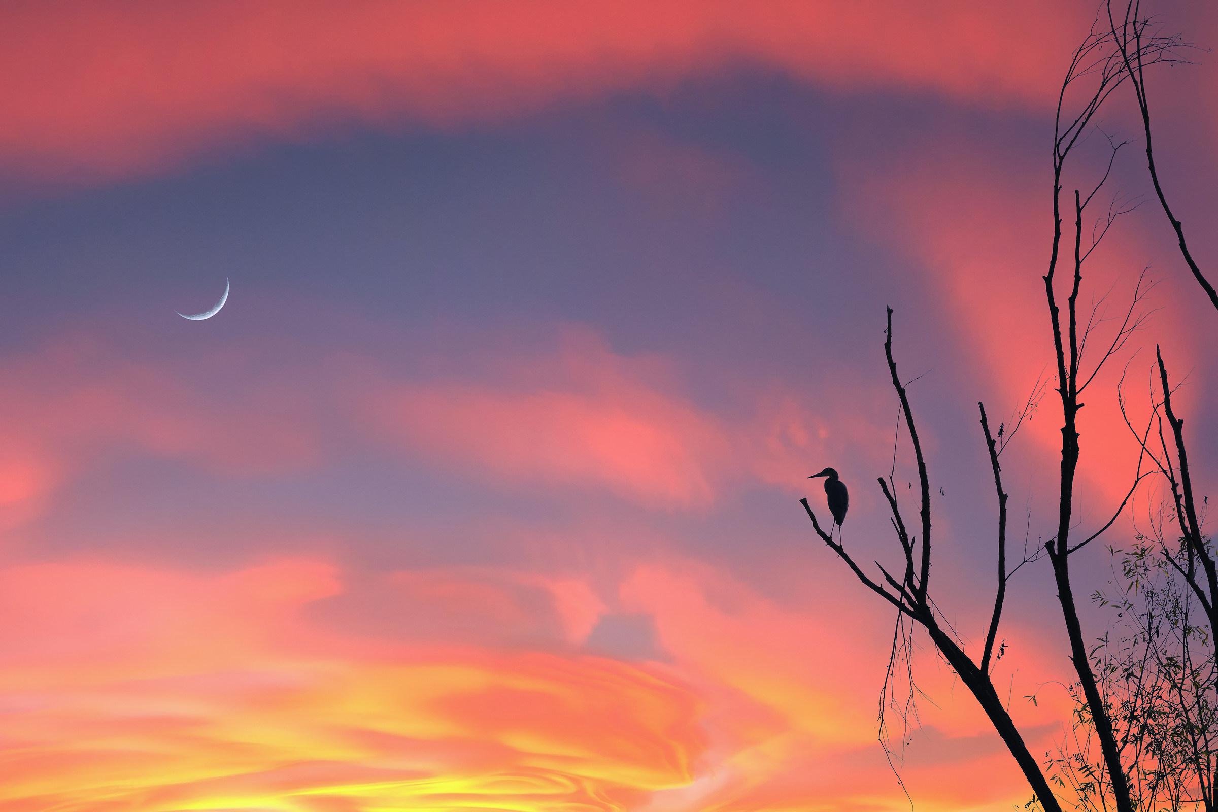 L'airone e la luna...