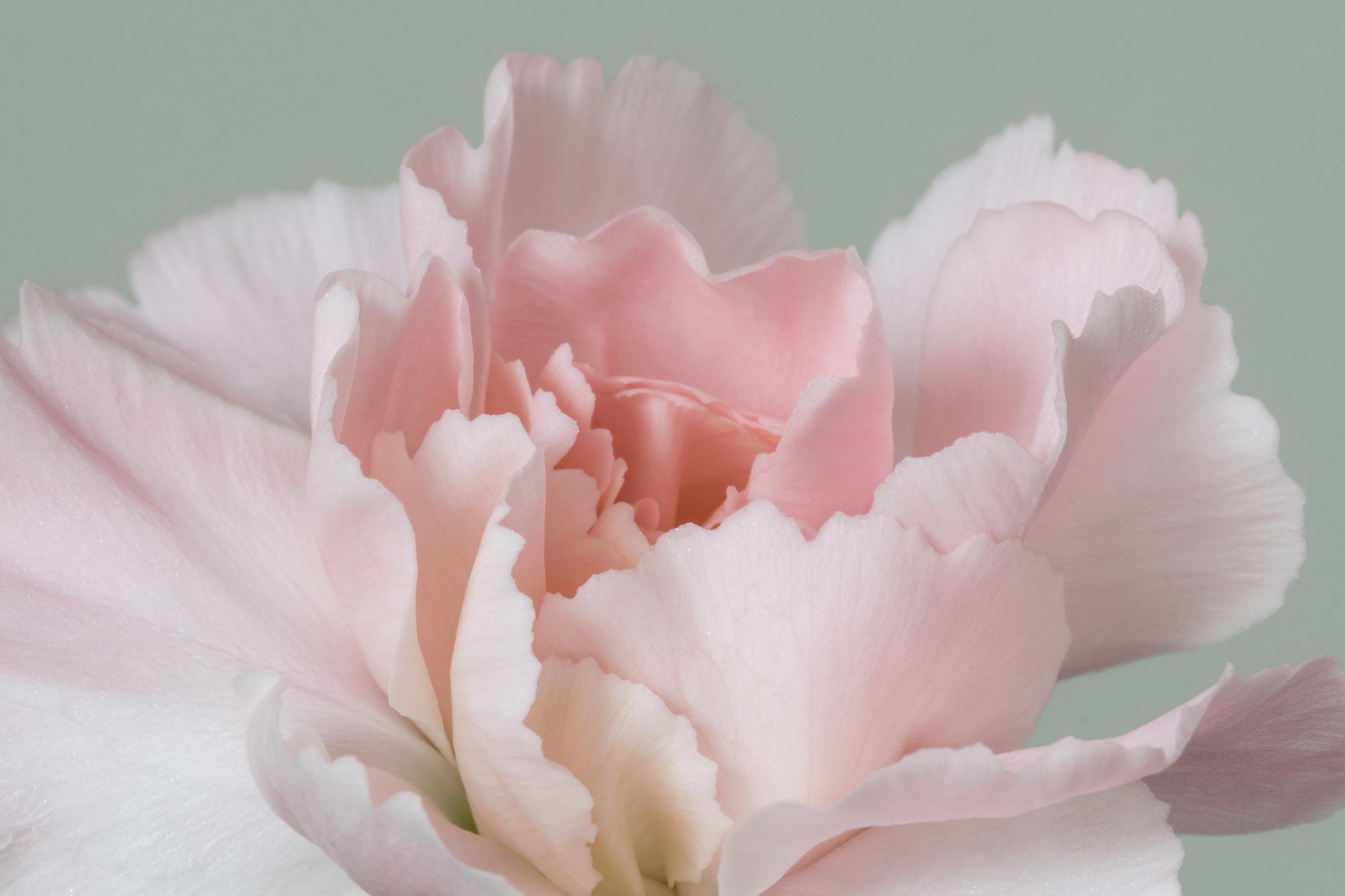 Silken Waves of Pink...