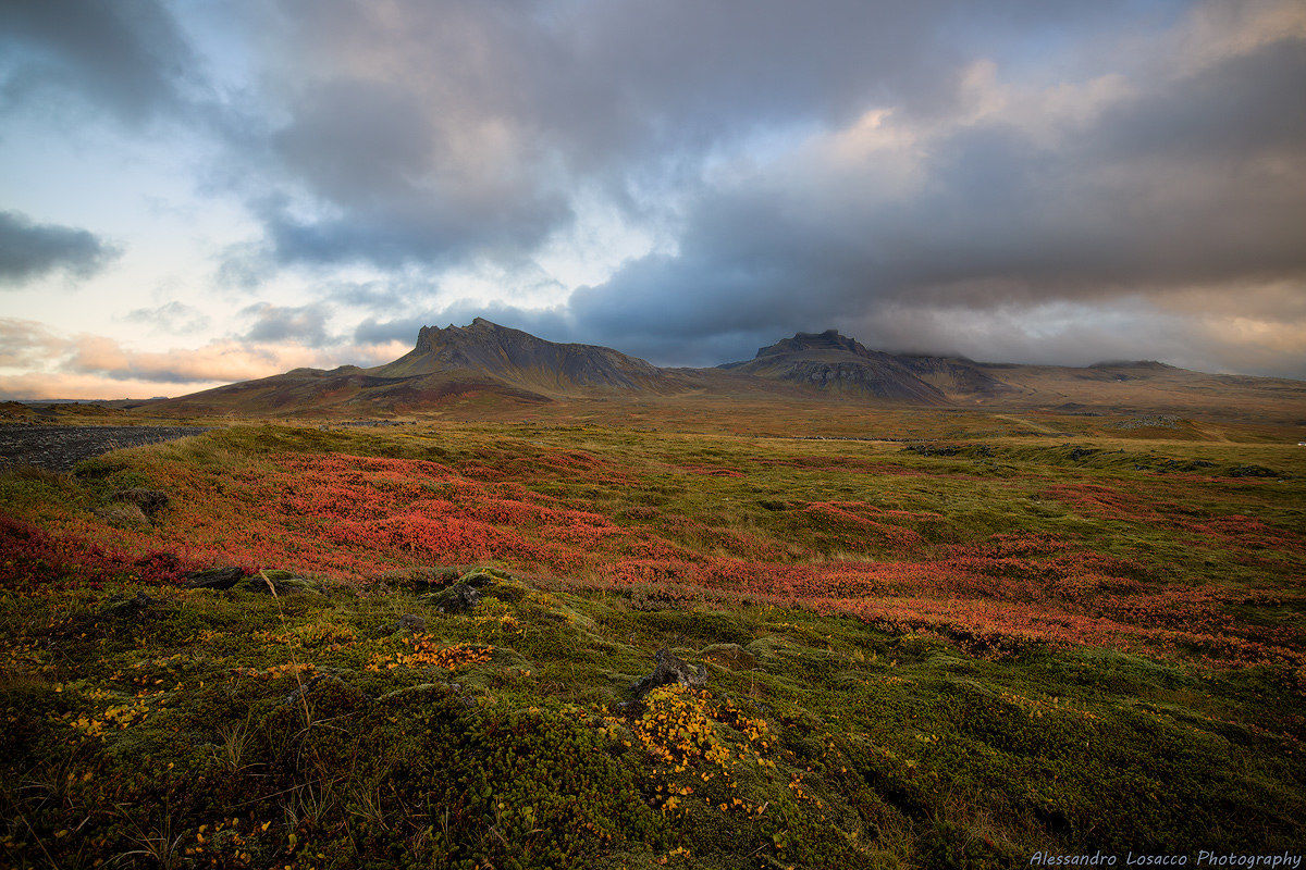 Icelandic colors...