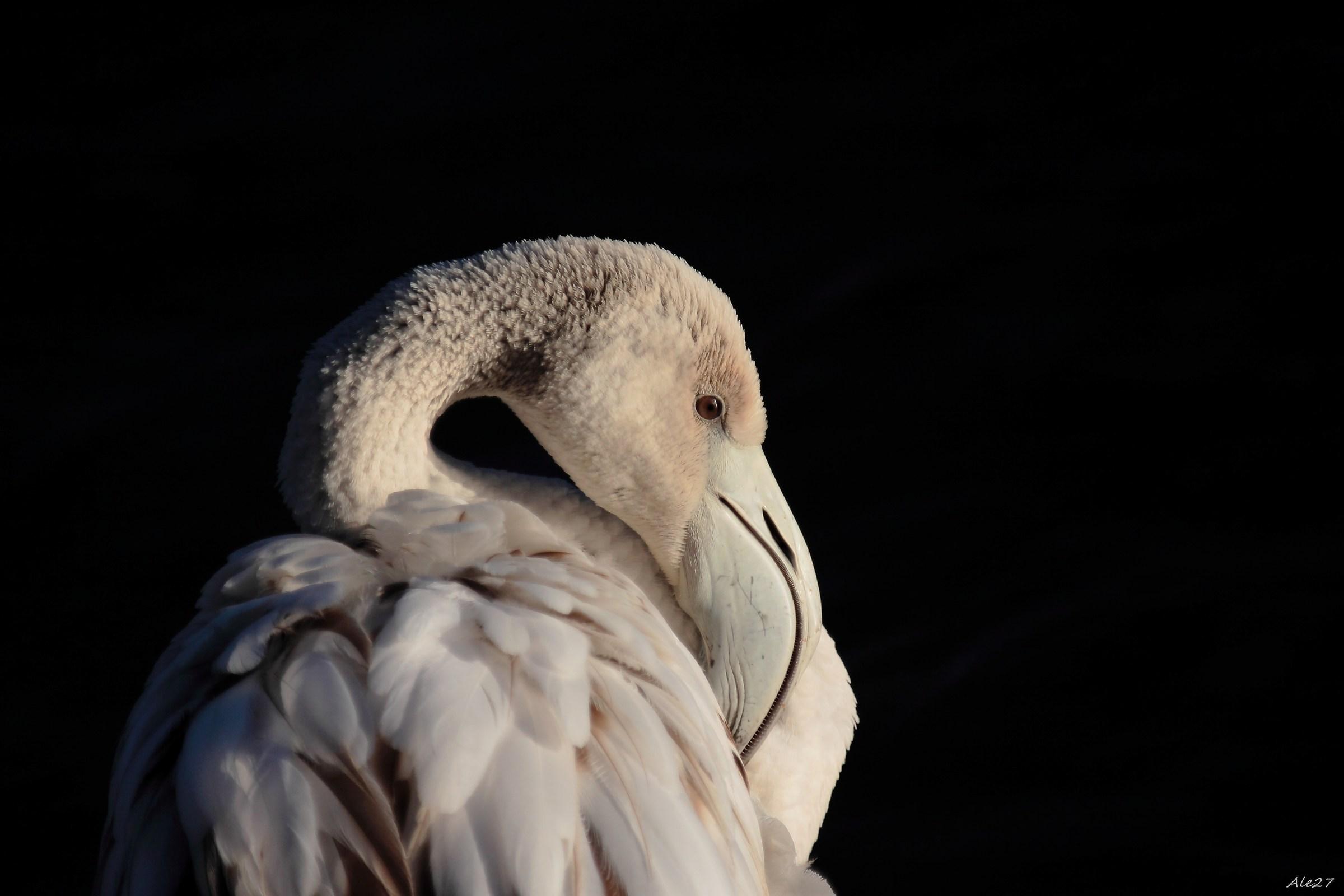 ... a flamingo ... for lucky luck ......