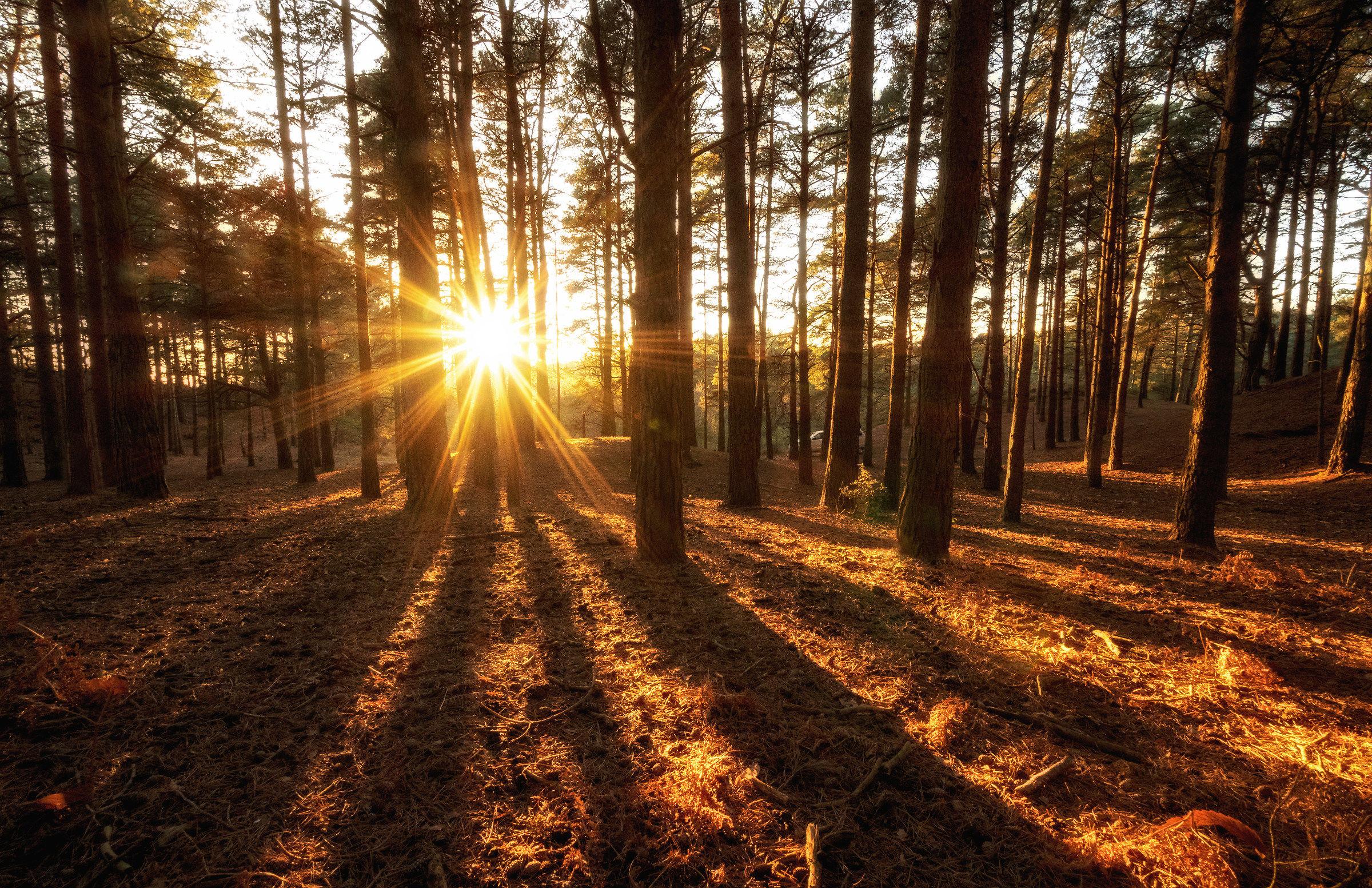 Last Rays of Sunlight...