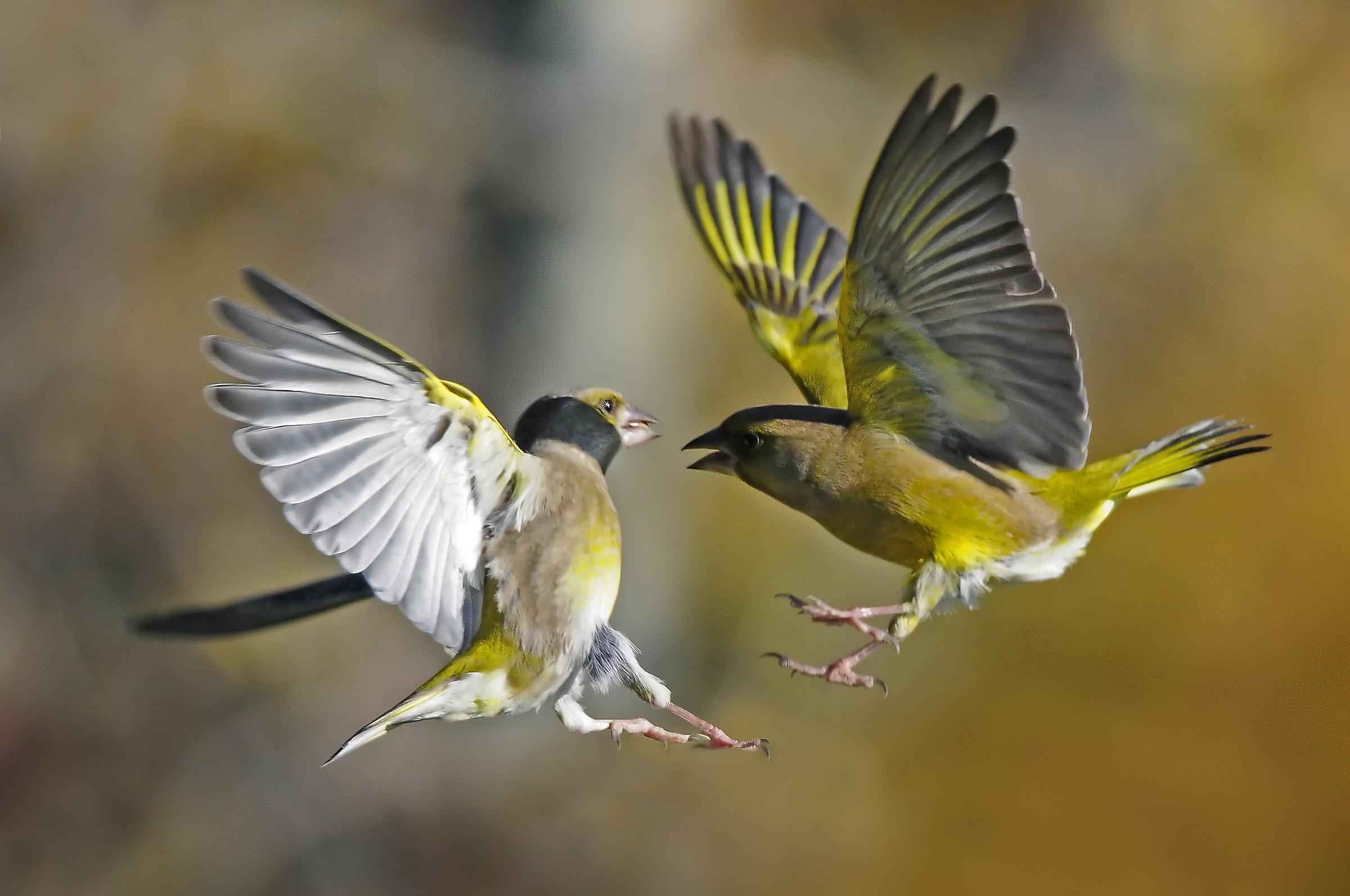 air battles...