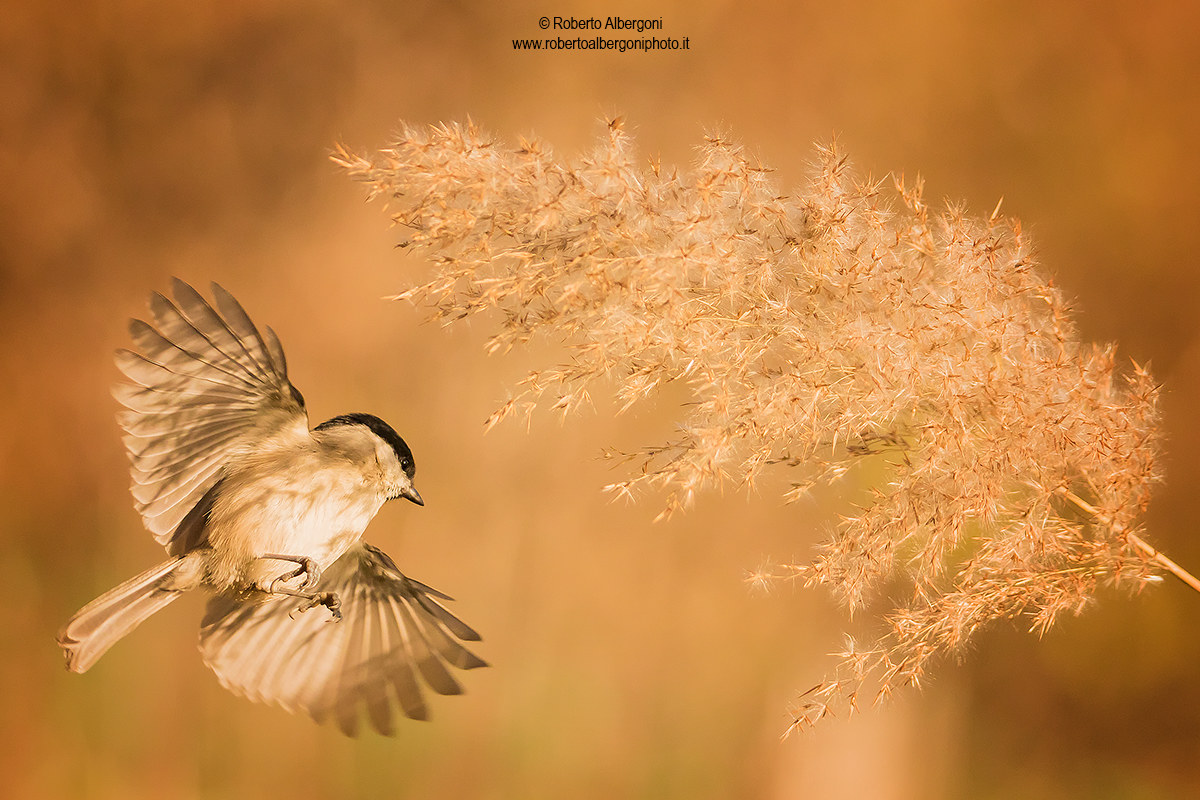 In the shade of the reed...